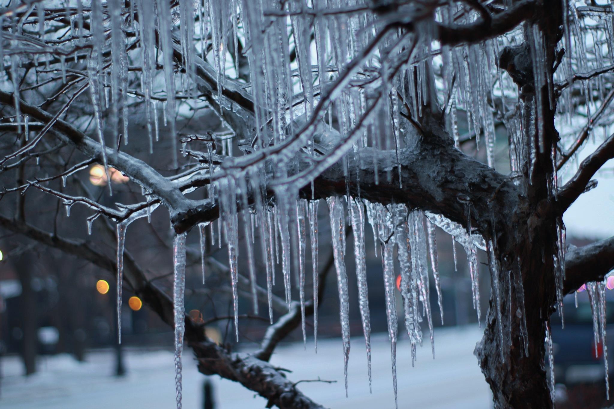 Ice Tree by Harold Dela Cruz