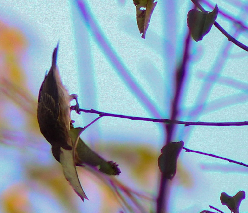 hanging by amanda b.