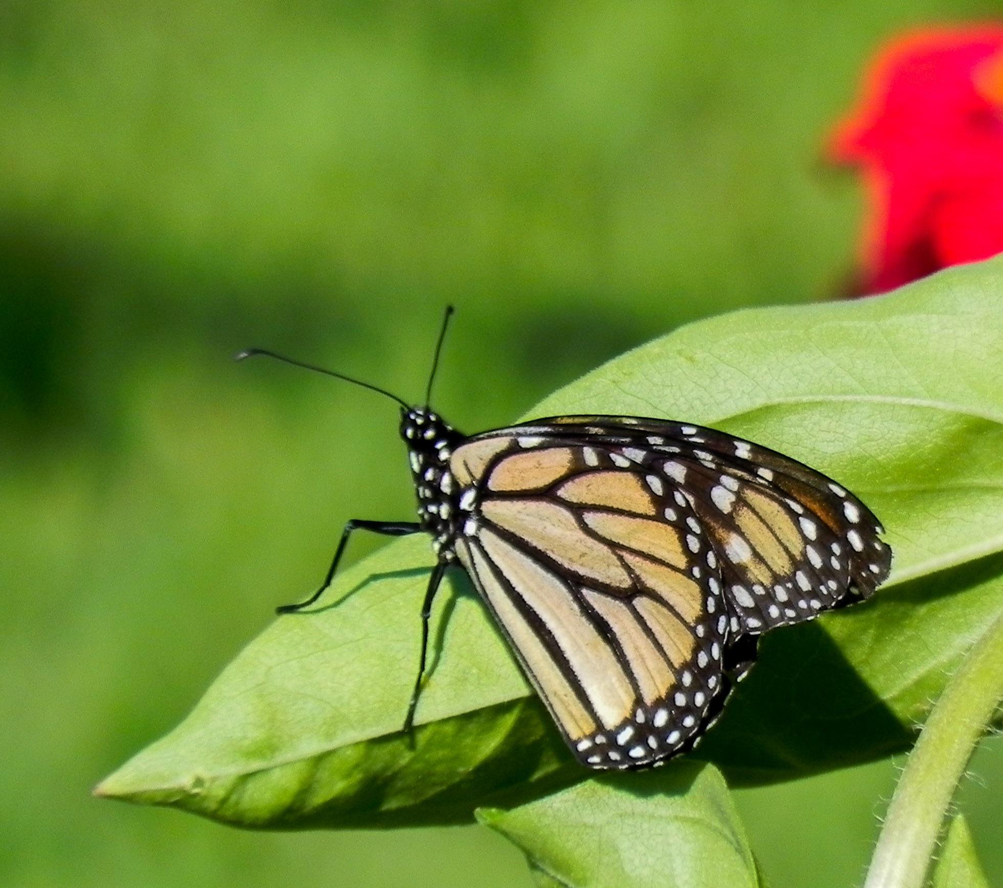butterfly by amanda b.