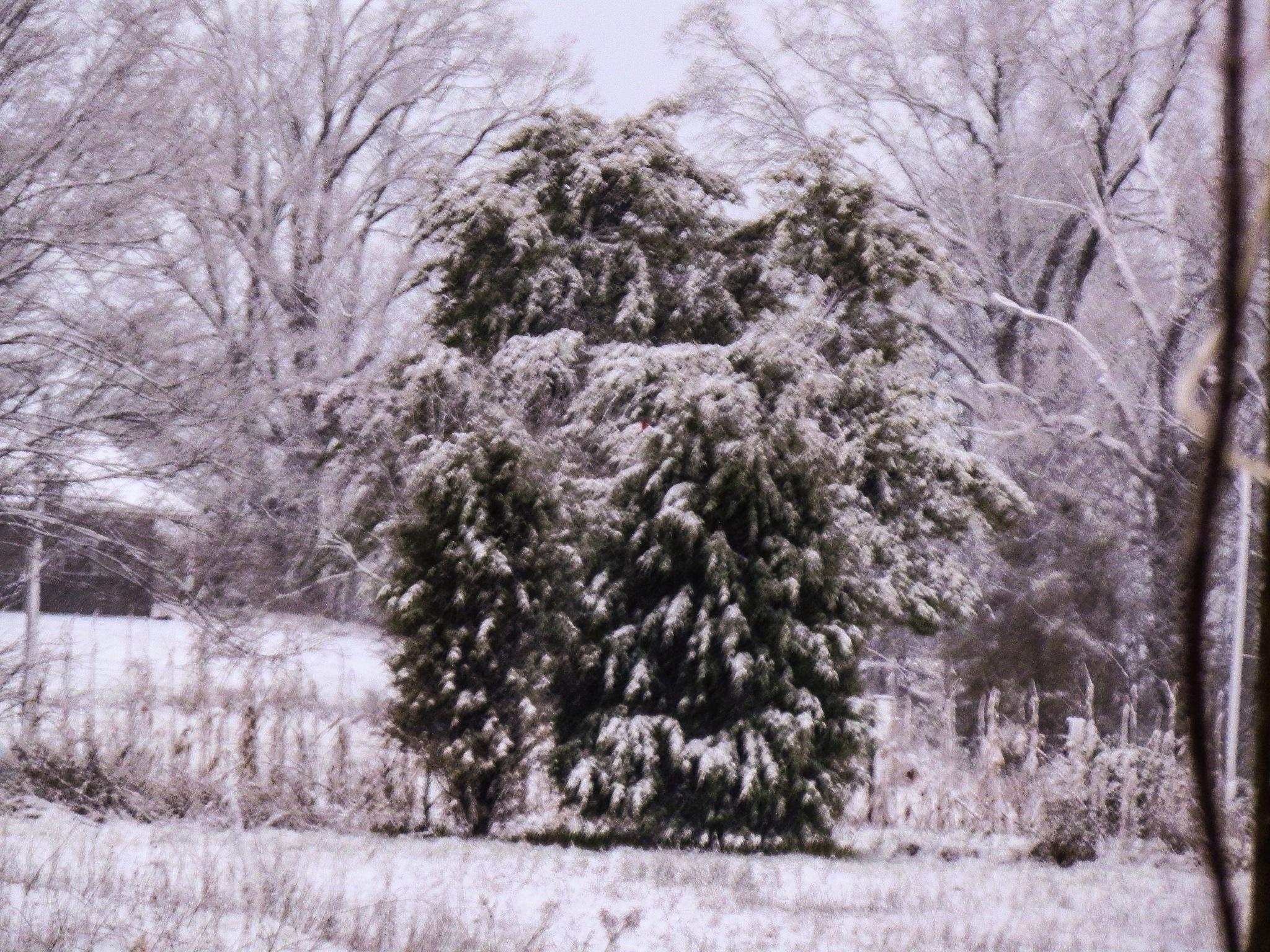 falling snow by amanda b.