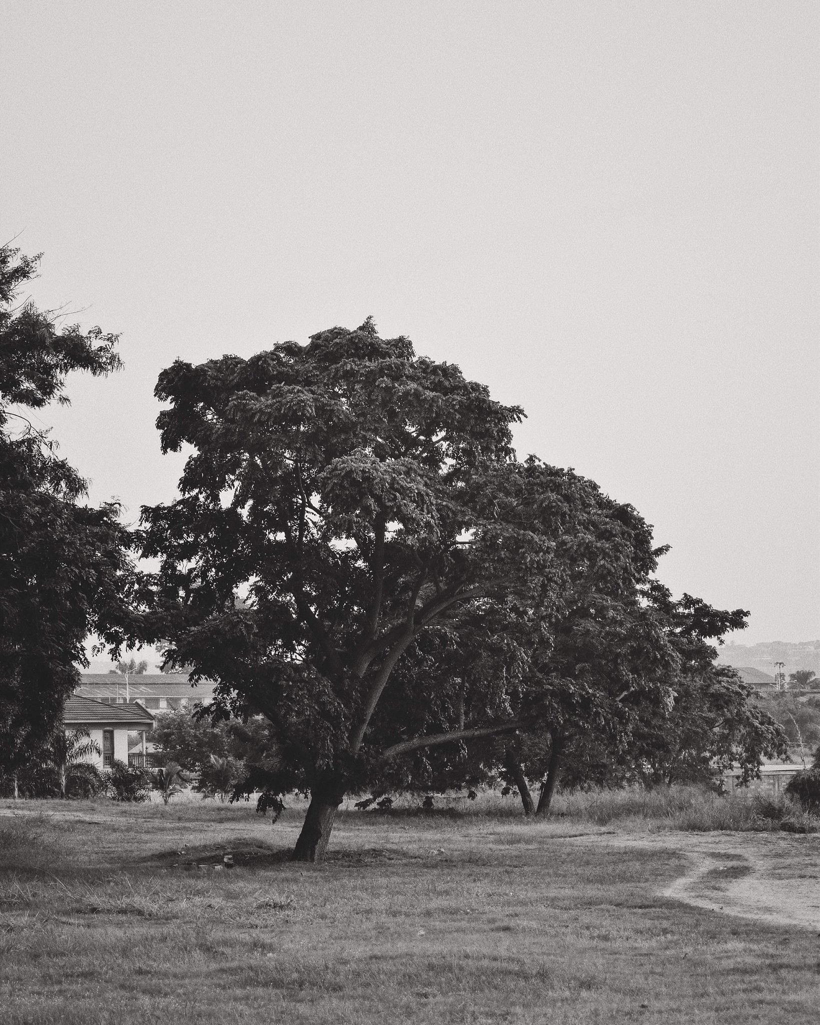 monochrome tree by Badr Bensaid