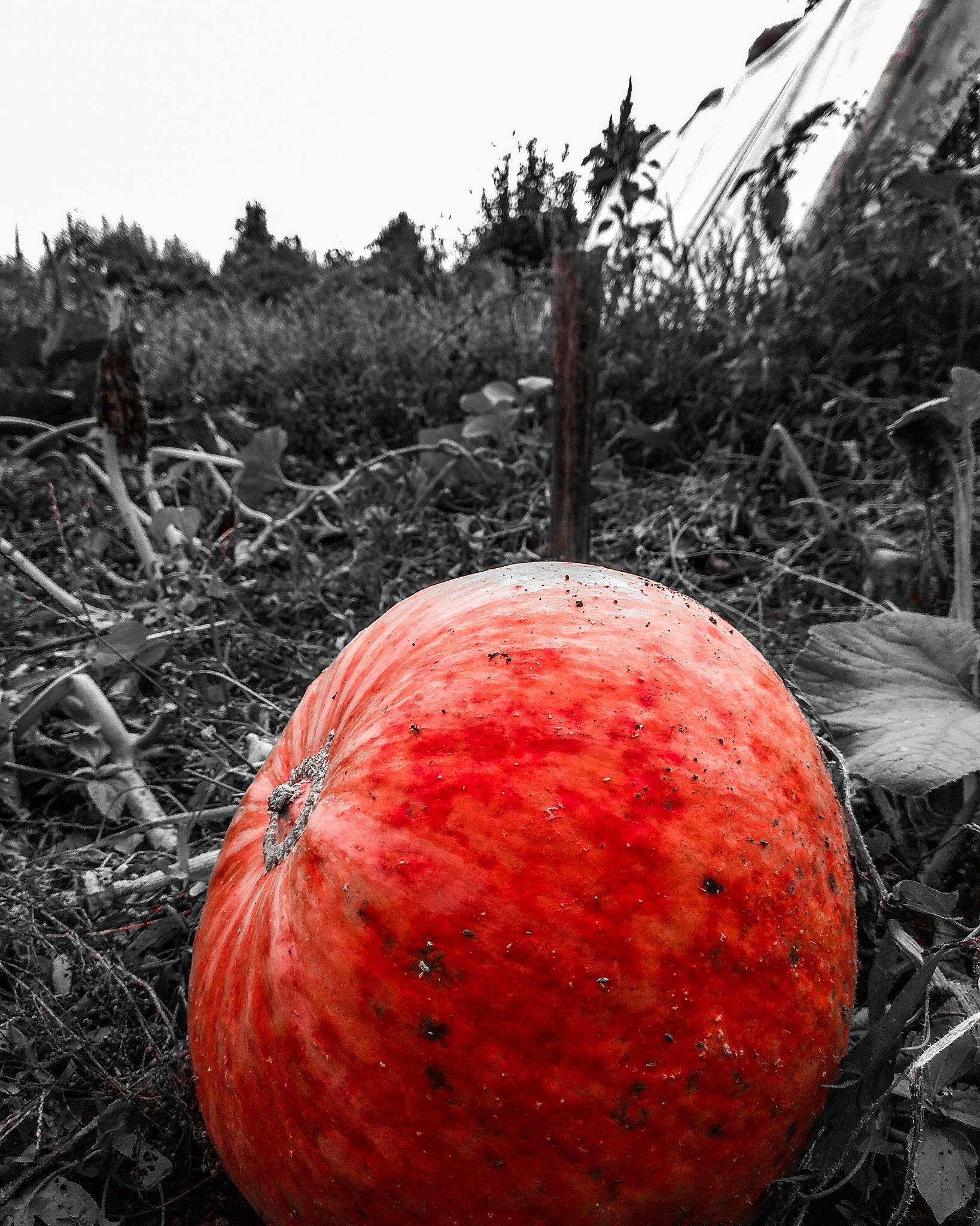 pumpkin by Johny_photography