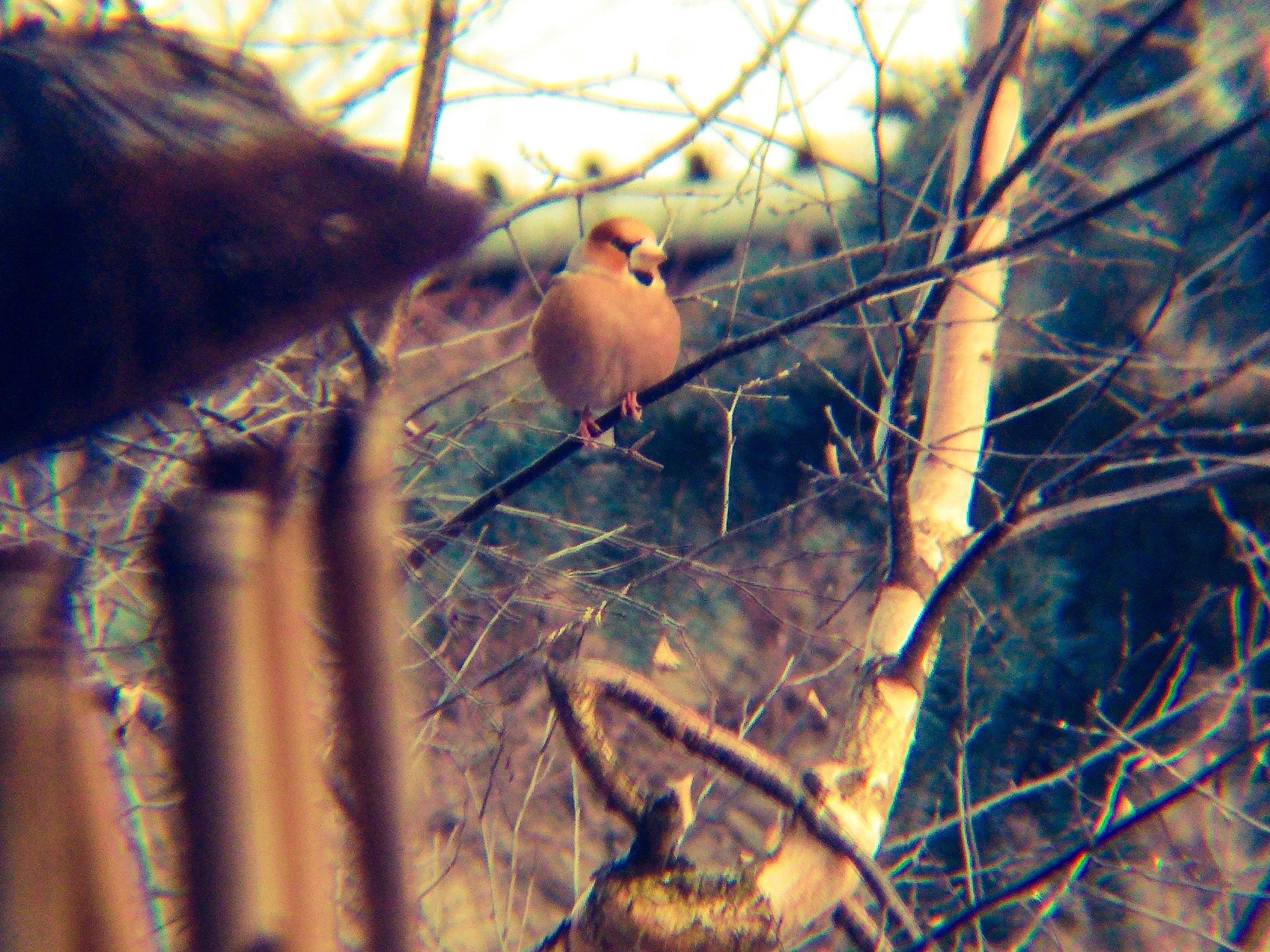 bird by Johny_photography