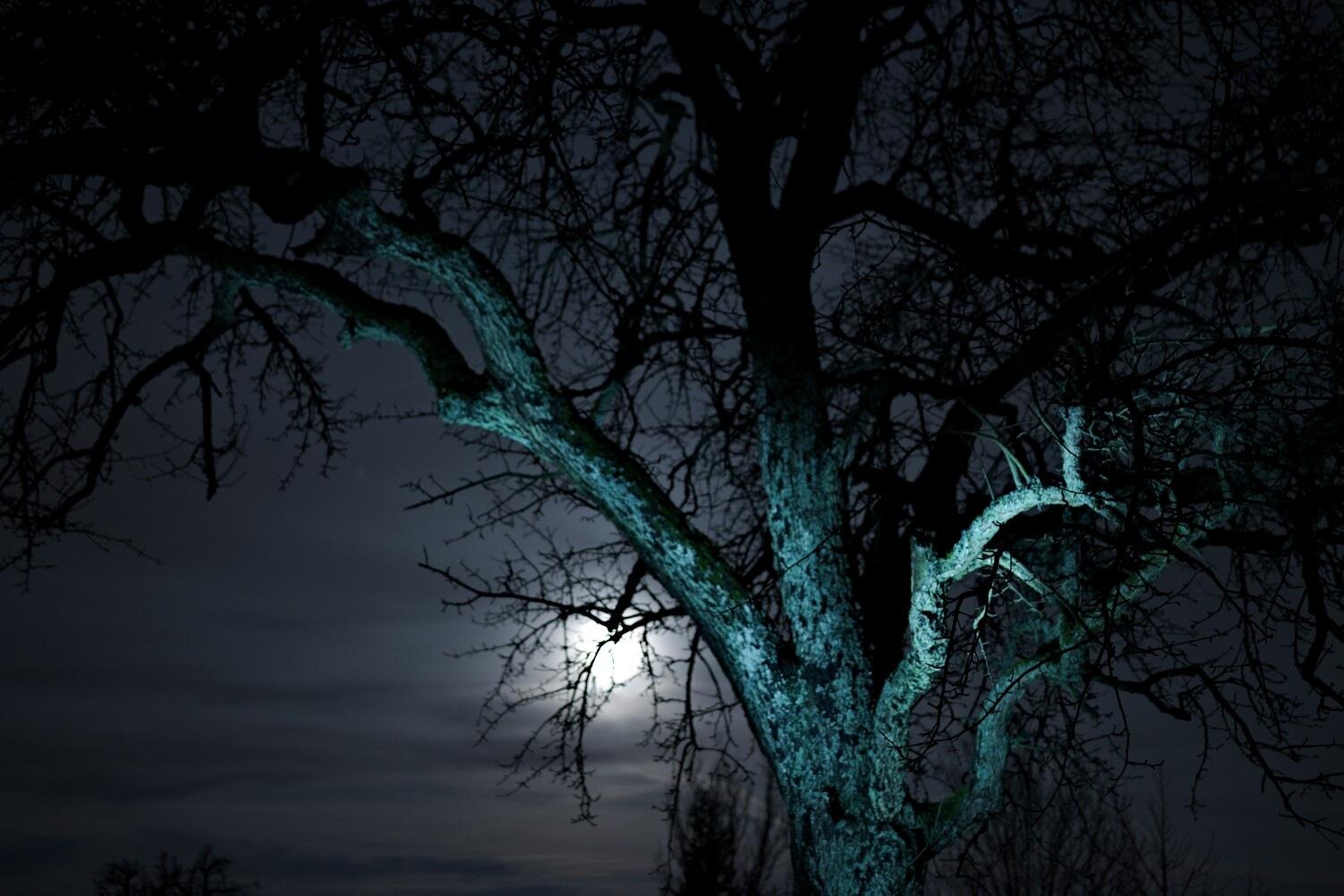 Blue Moon by Luis Hafner