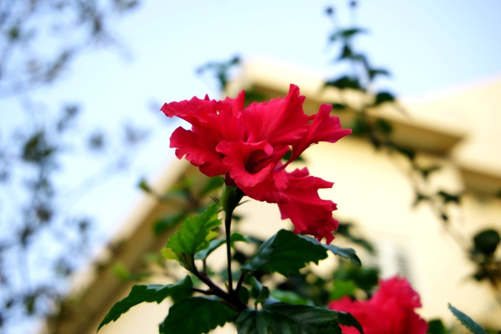 vintage flower pic by shahak gonen