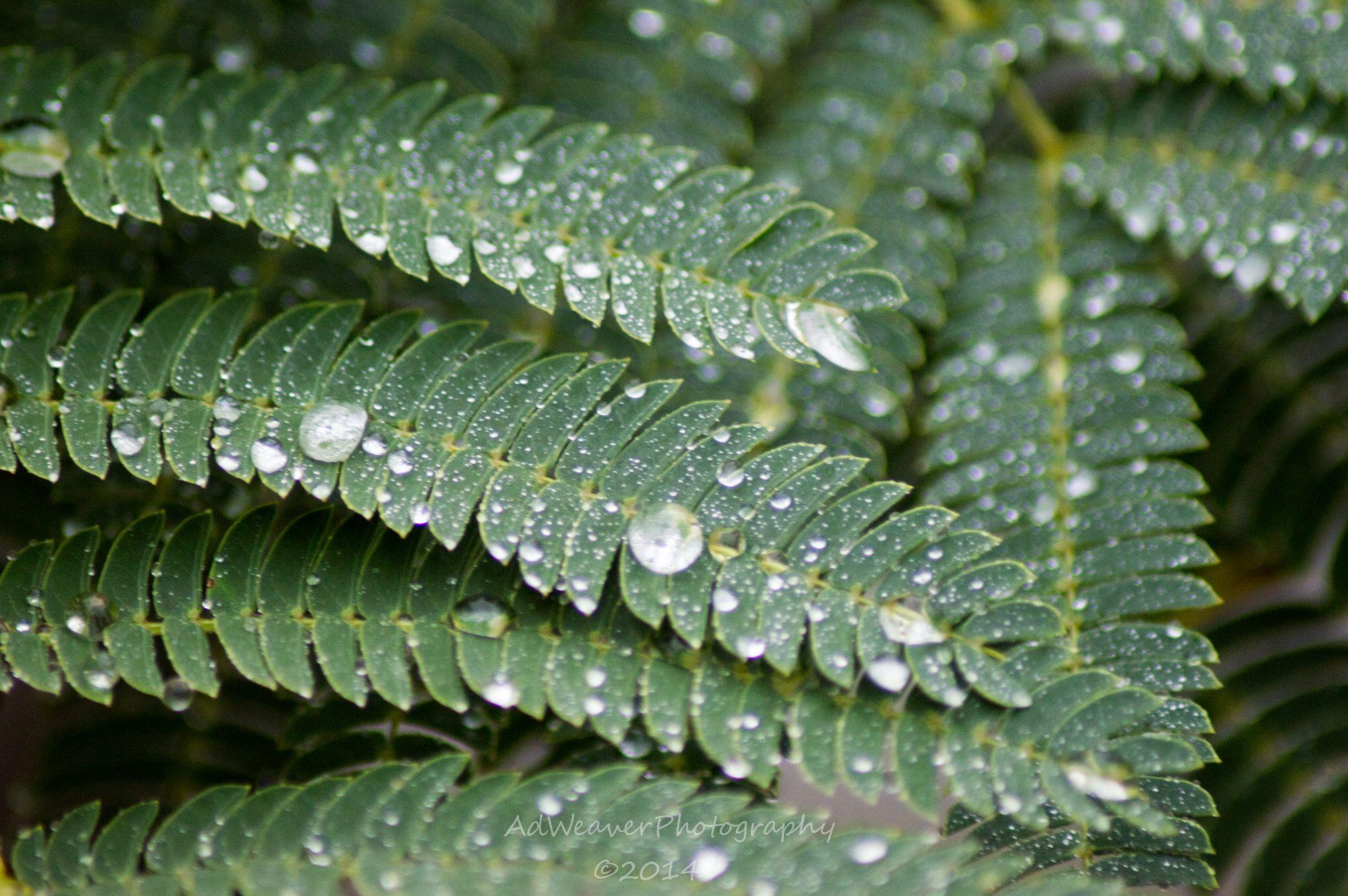Raindrops by Danielle Weaver
