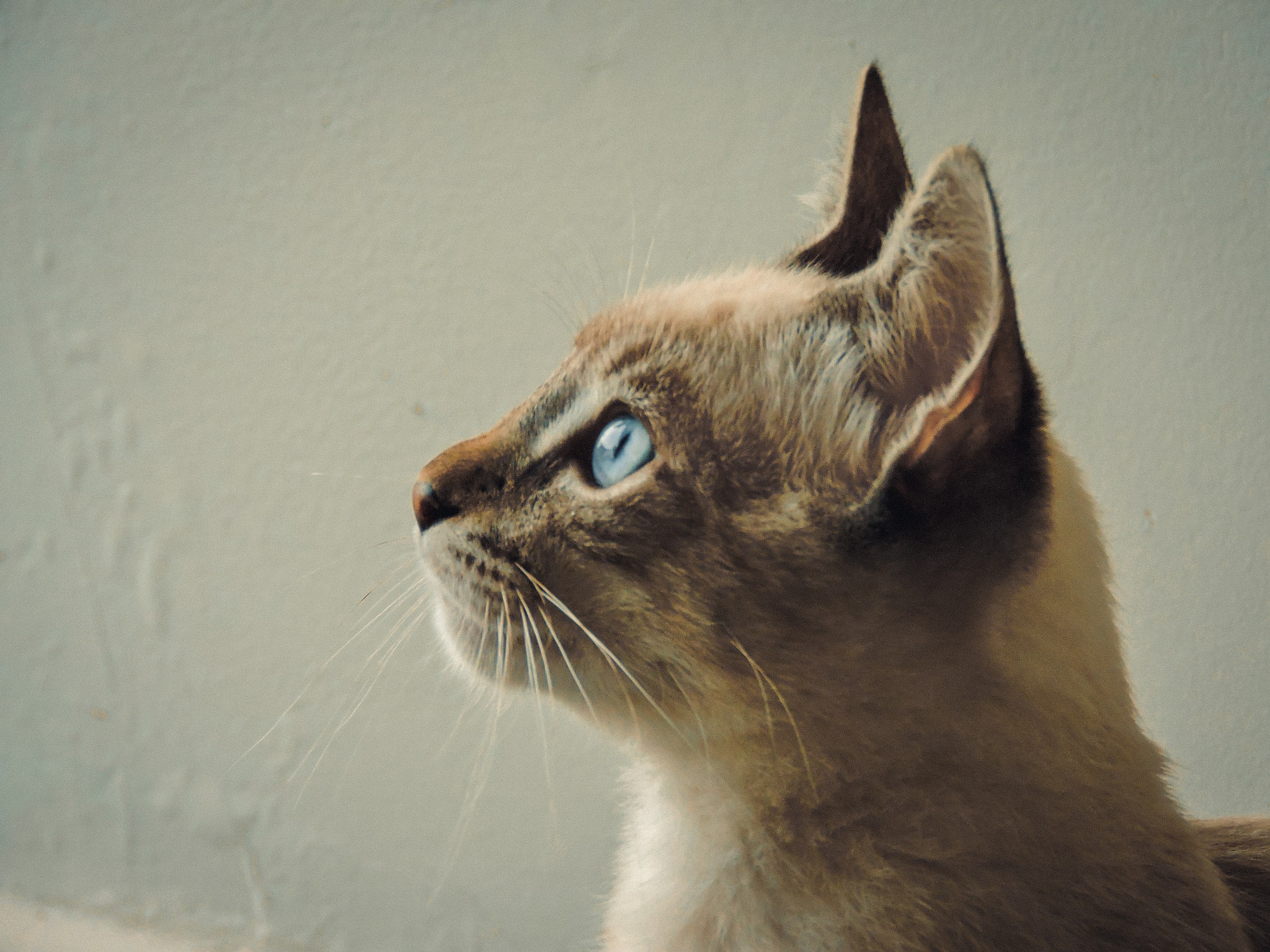 cat portrait by Alexandre Pimenta