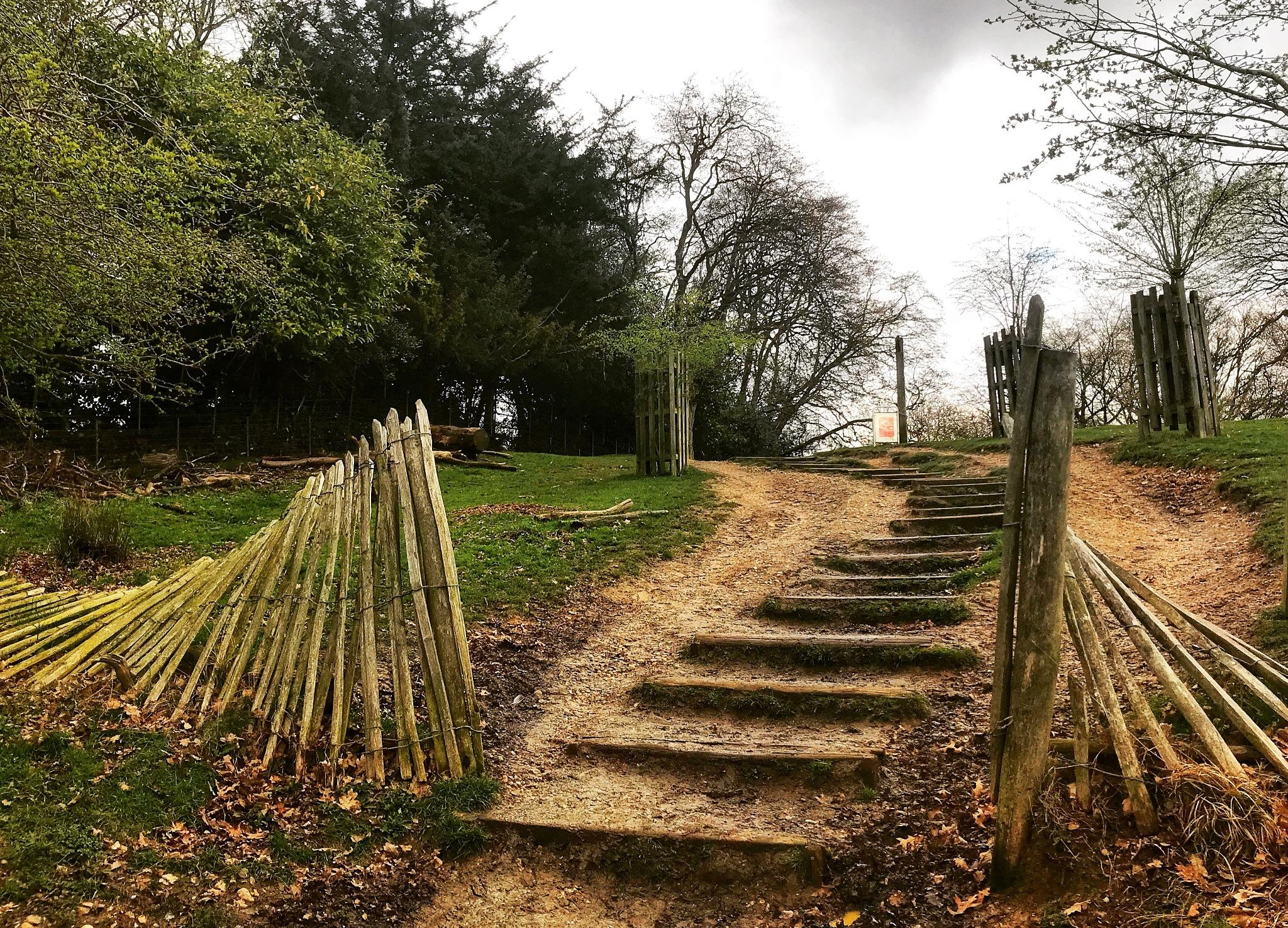 Richmond Park - London by Magdalena Rewt