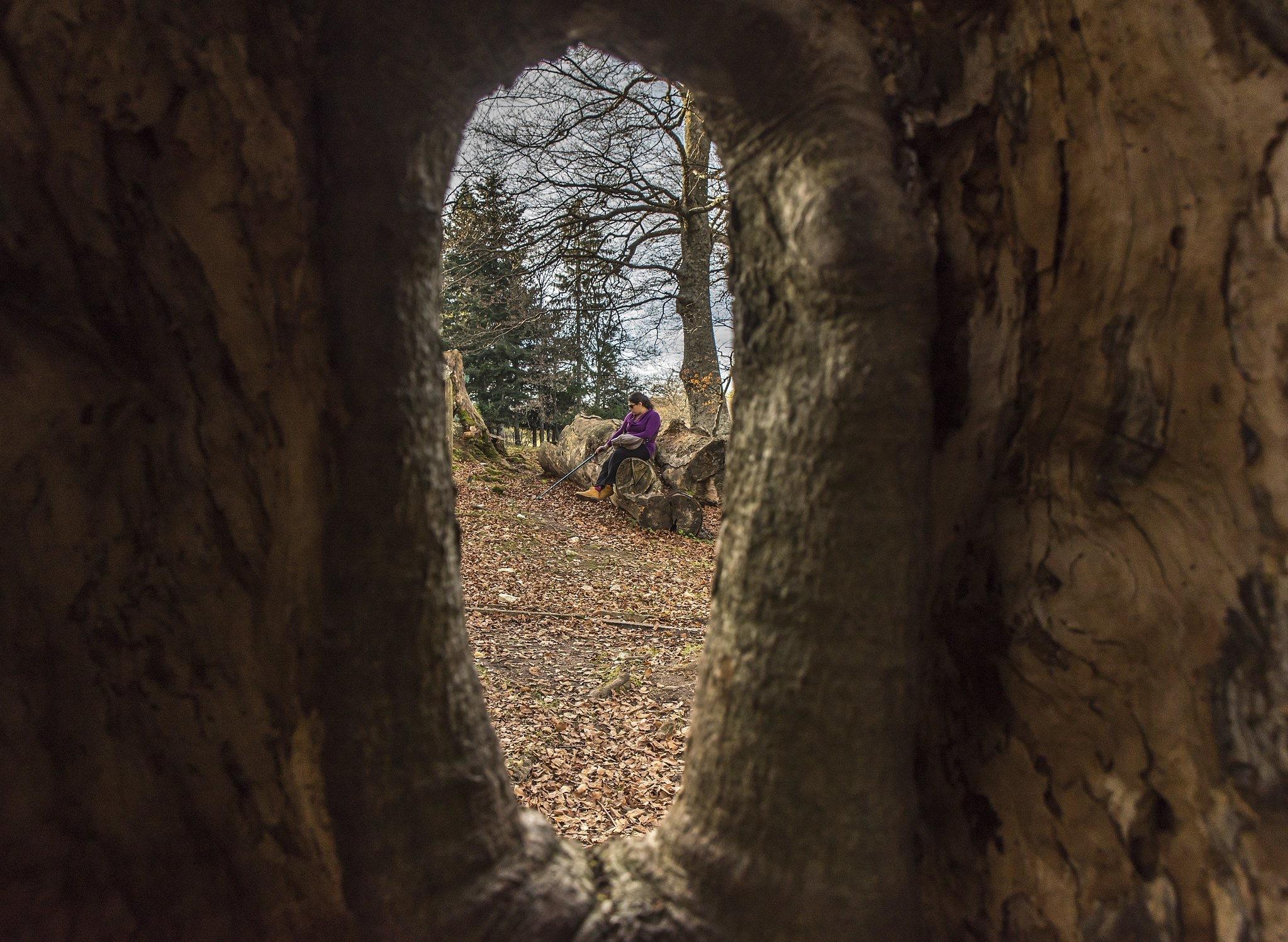 Trough the Tree by Alessio Rendimonti