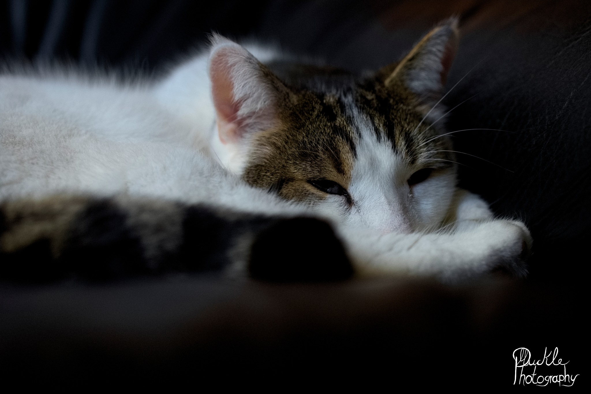 Almost sleeping Mulle by Muckle_Photography