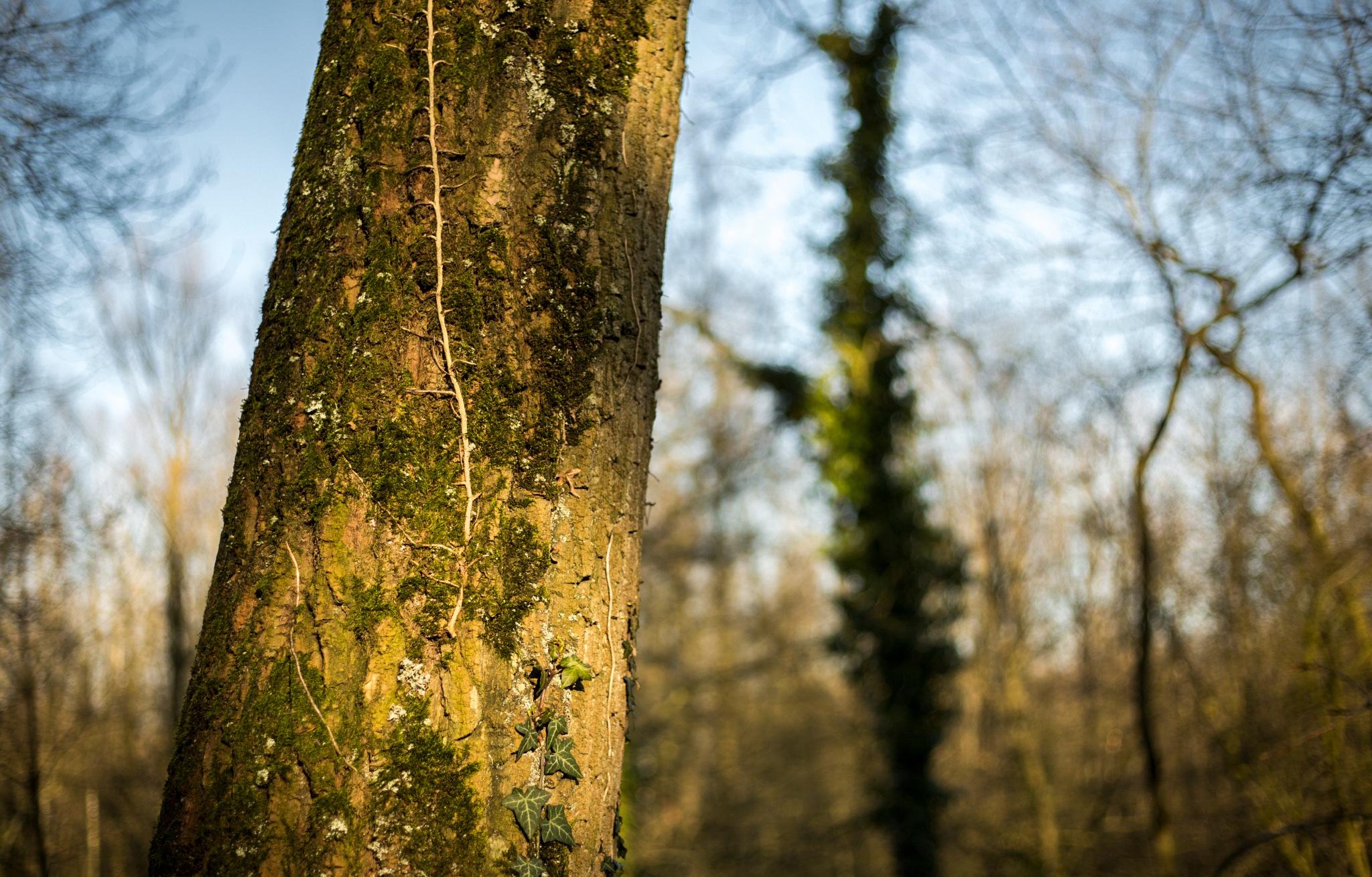 Tree by sofiakusmierczyk