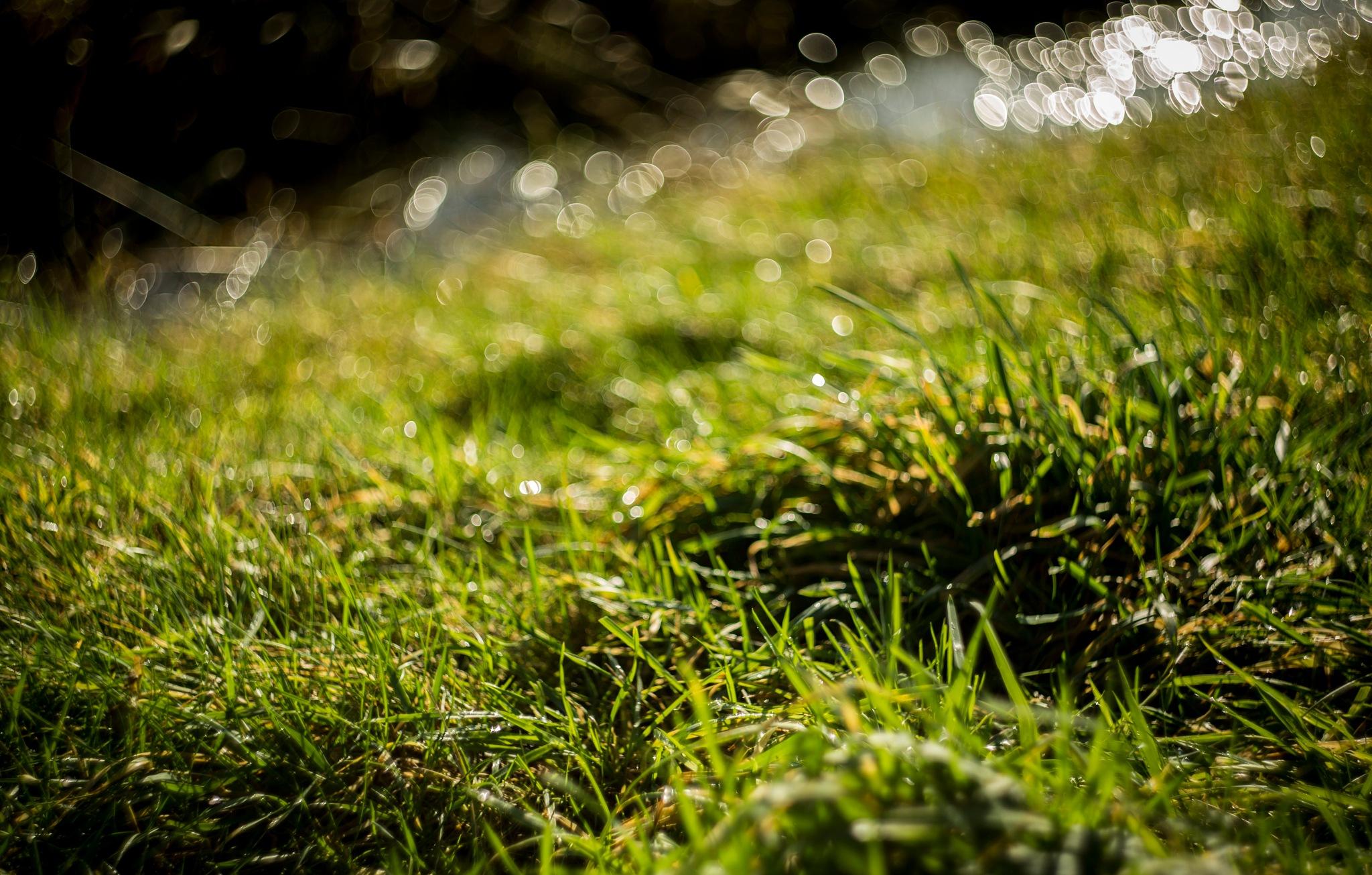 Grass by sofiakusmierczyk
