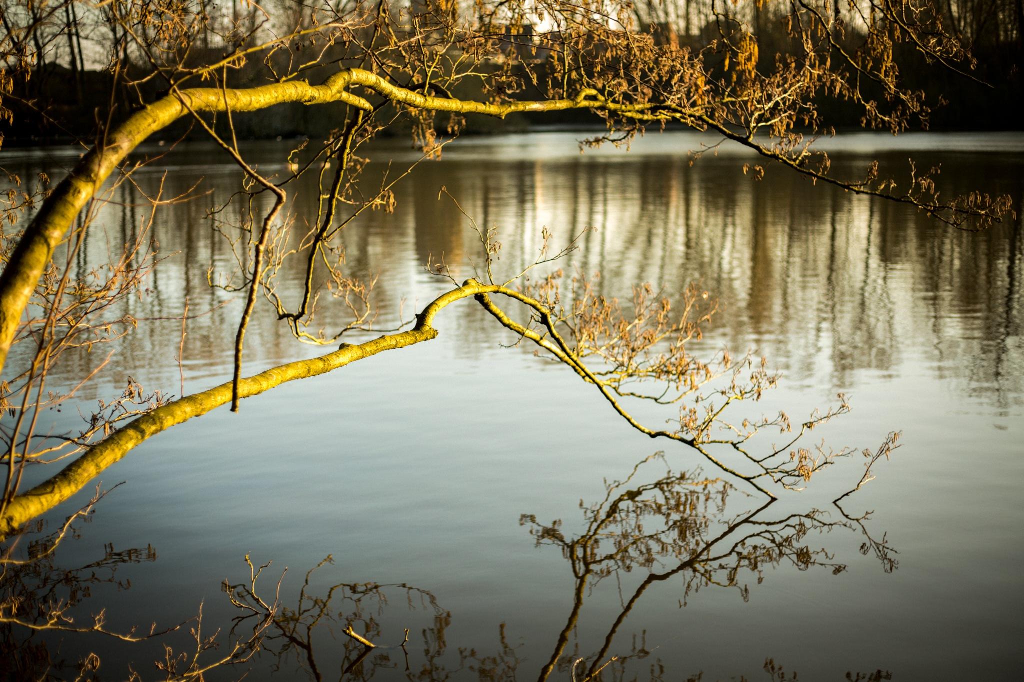 Lake by sofiakusmierczyk