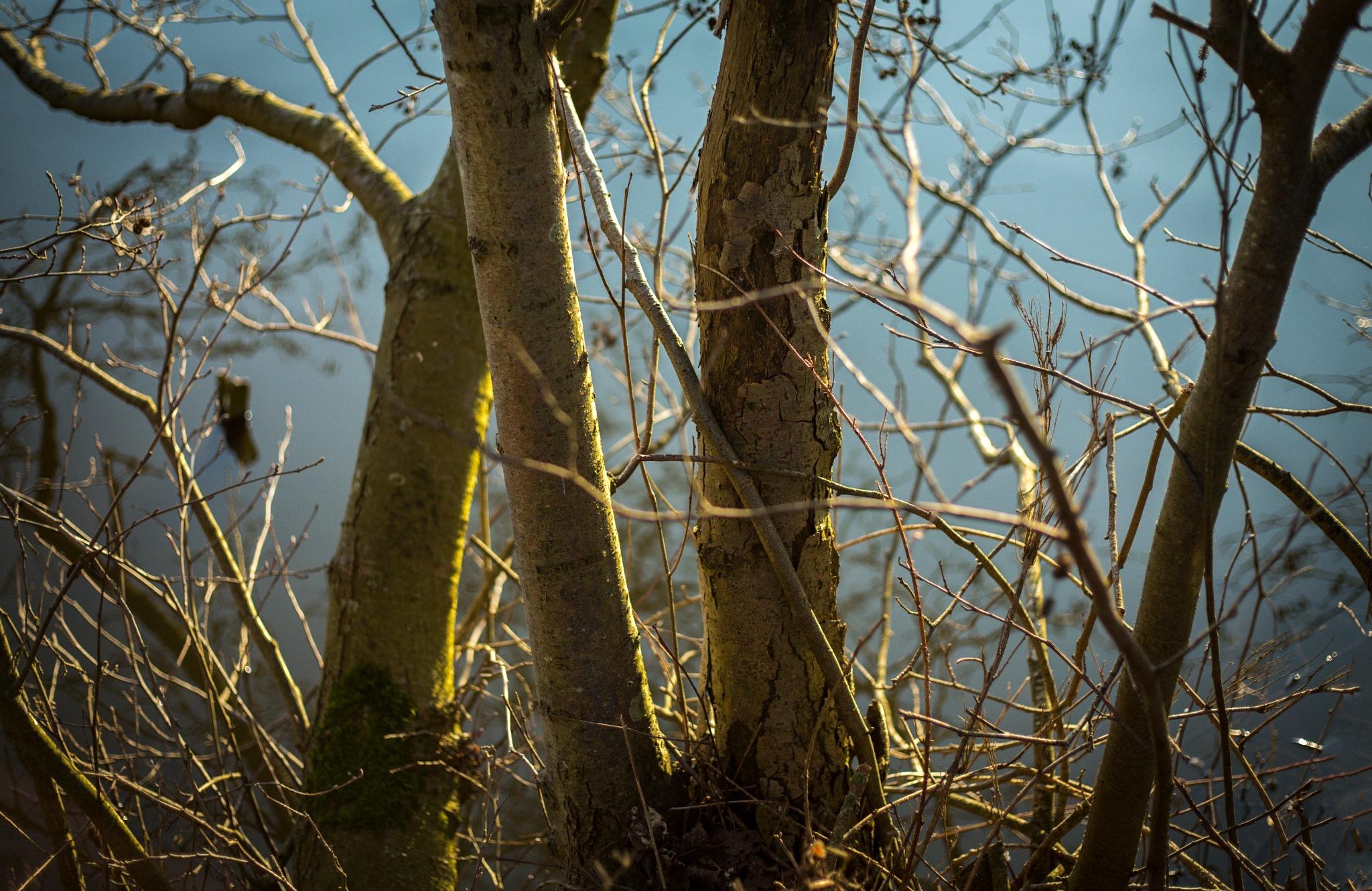 Trees by sofiakusmierczyk