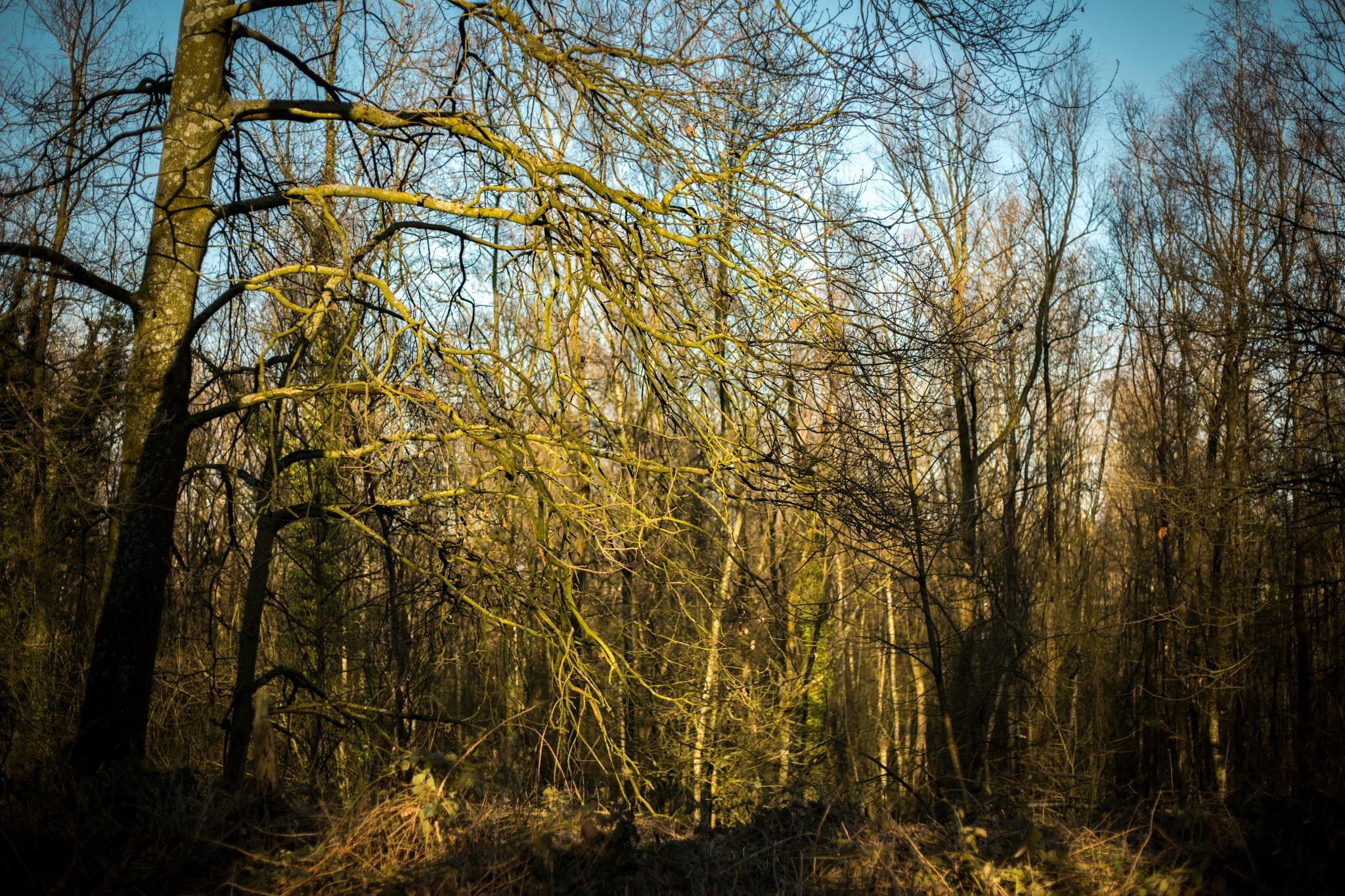 Forest by sofiakusmierczyk
