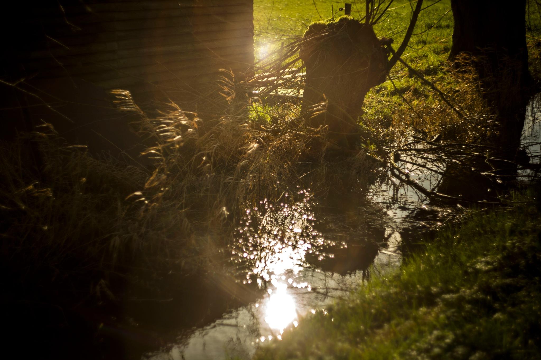 Sunshine by sofiakusmierczyk