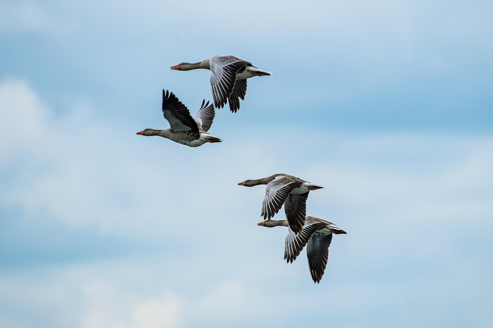 Photo in Animal #nature #birds #wild life