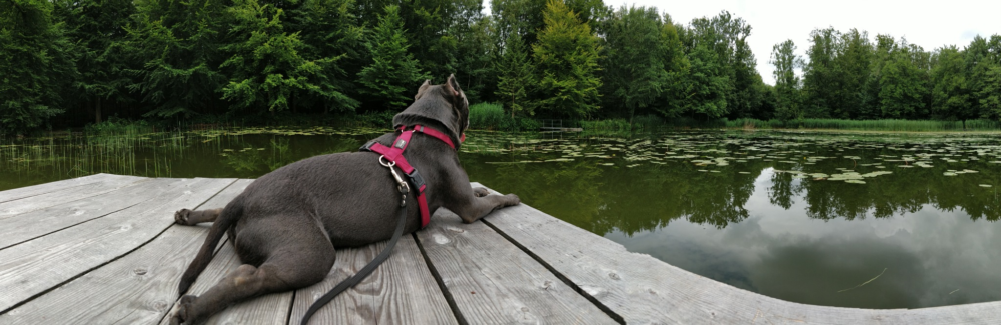 Dog resting @ lake by Lesley Drd