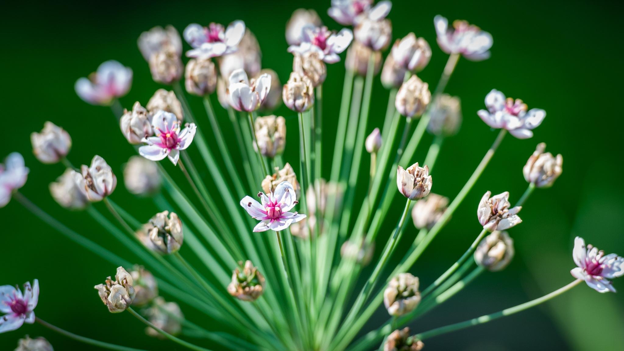 Flower by LancePangborn
