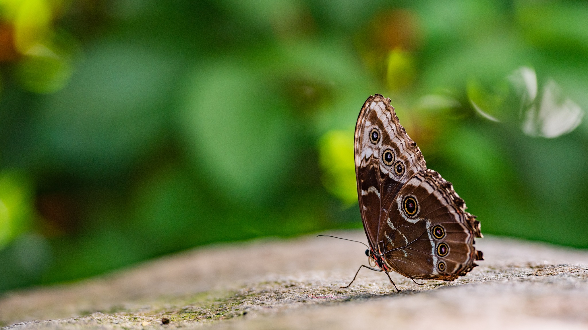 Butterfly 01 by LancePangborn