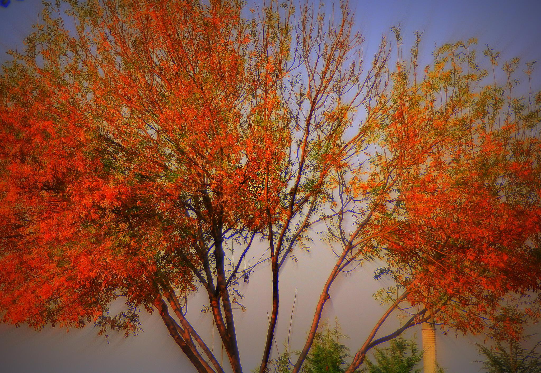 red leaves by Elisabeth Alkaya