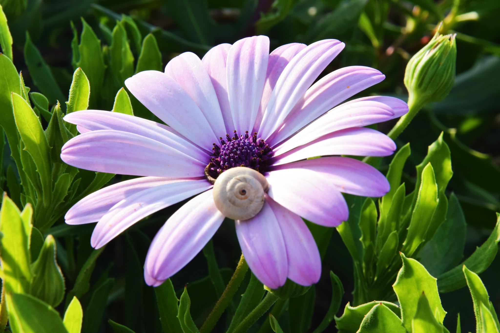 Flower by Rihab