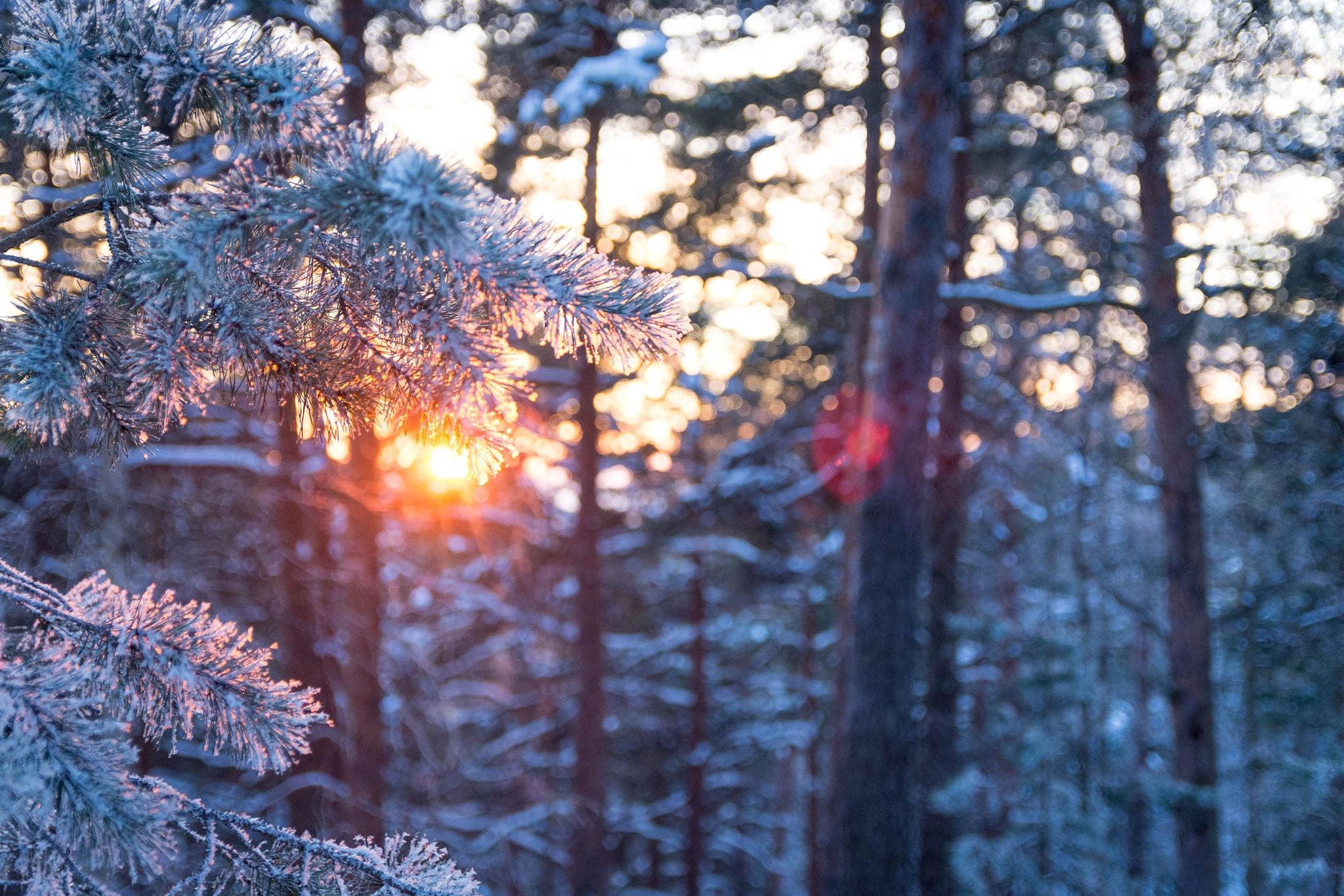 Winter Wonderland by Petri Pihlaja