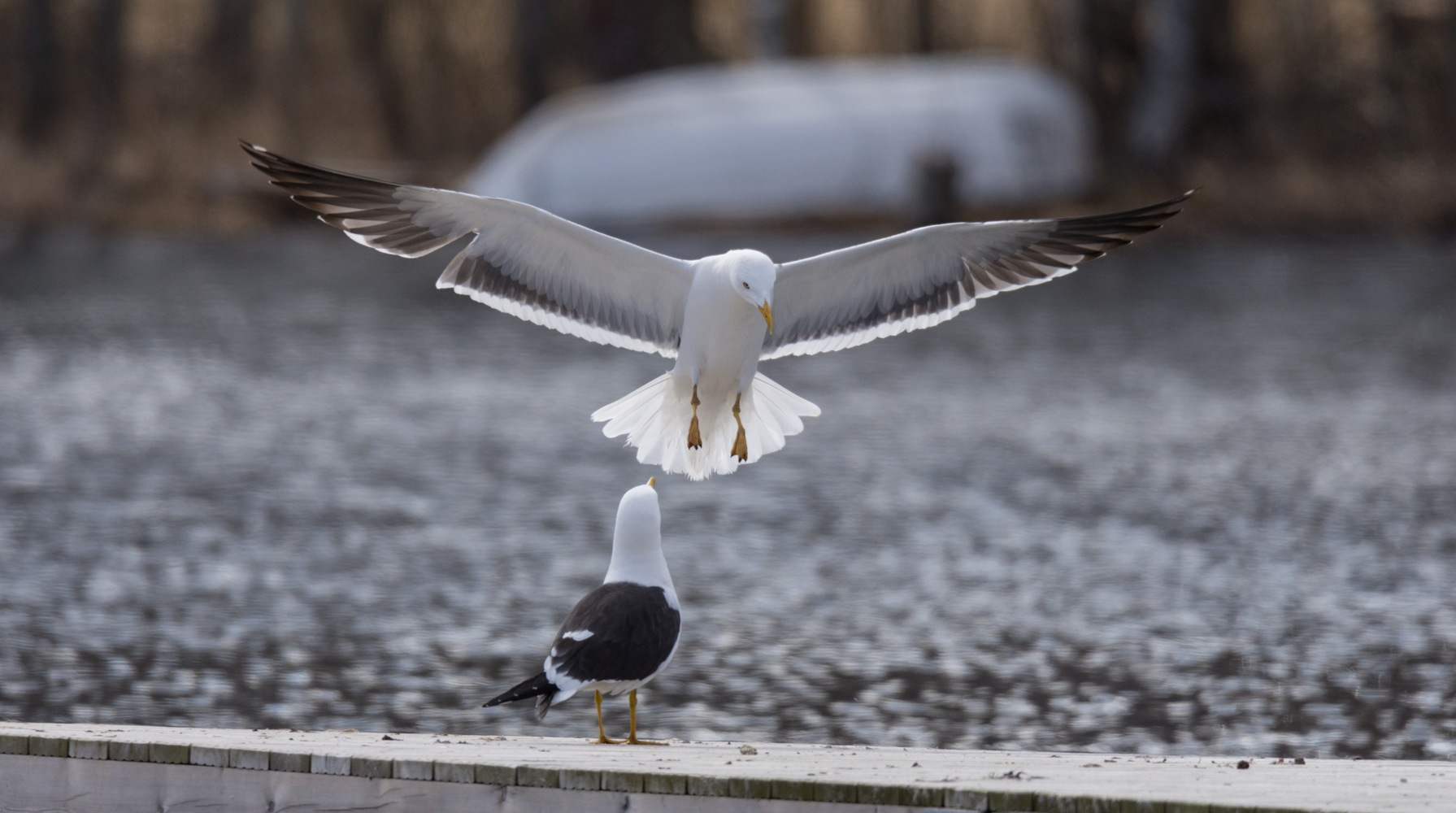 Coming in for a landing by Petri Pihlaja