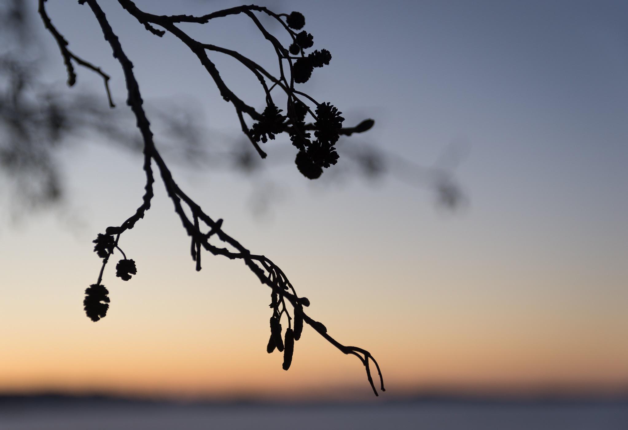 Branch silhouette at sunset by Petri Pihlaja