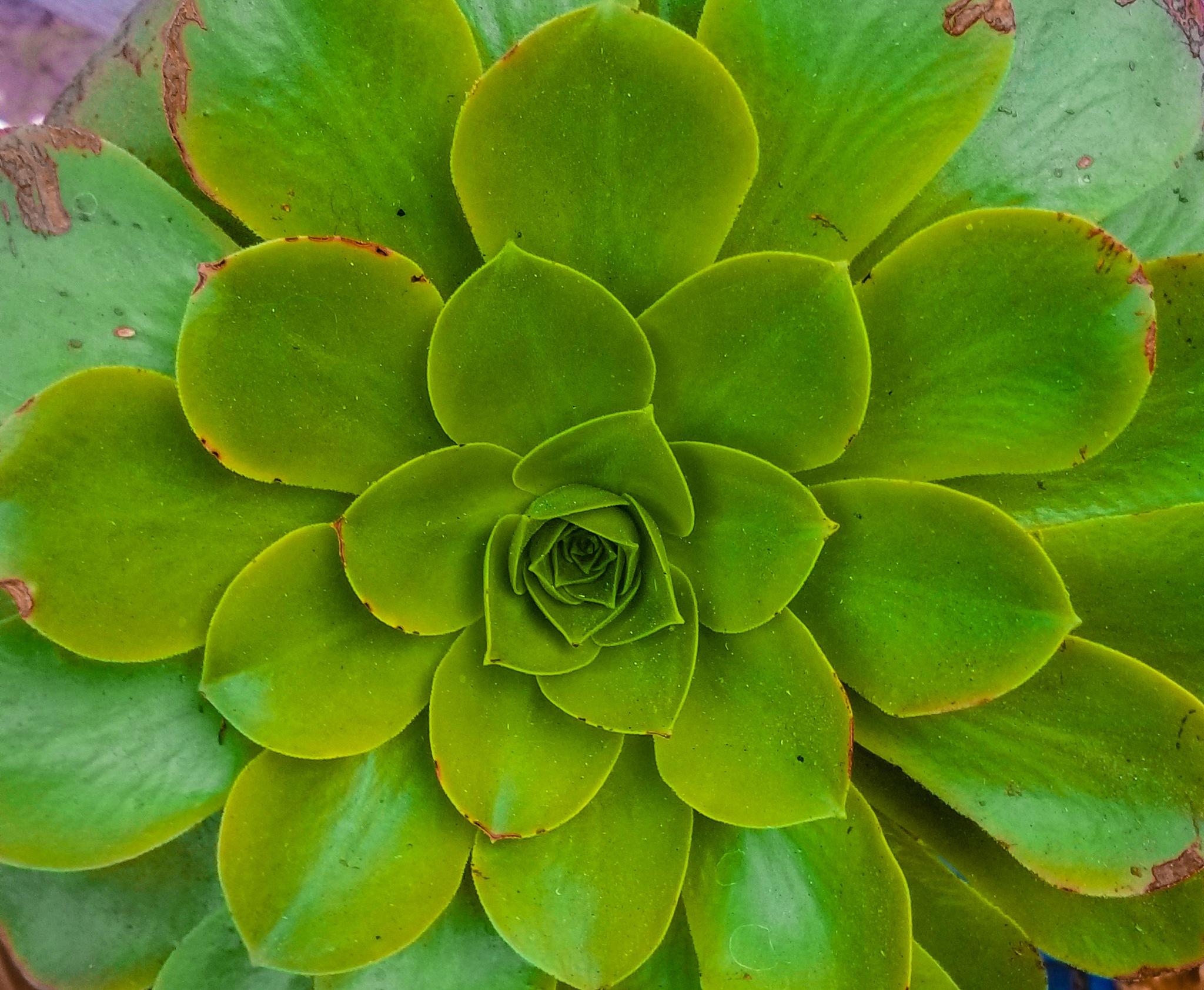 Succulent  by Erin Lynch