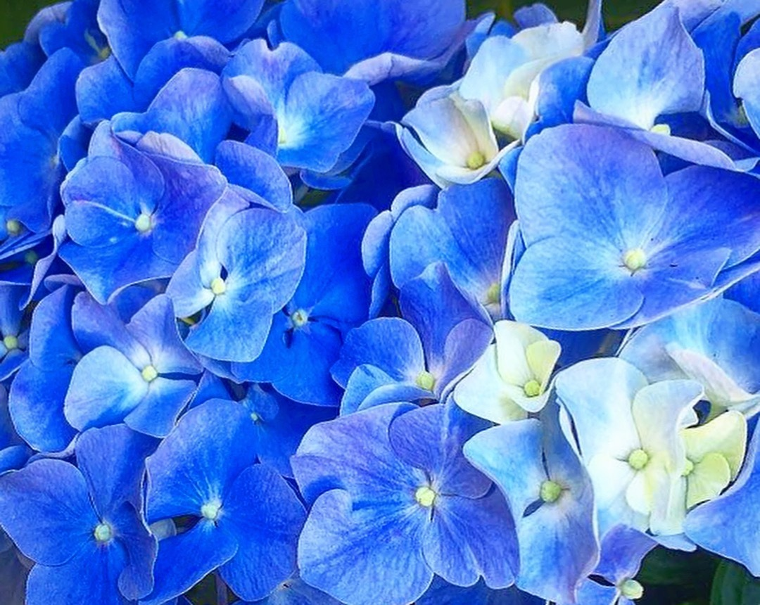 Blue  by Ngoc-Tram Tran