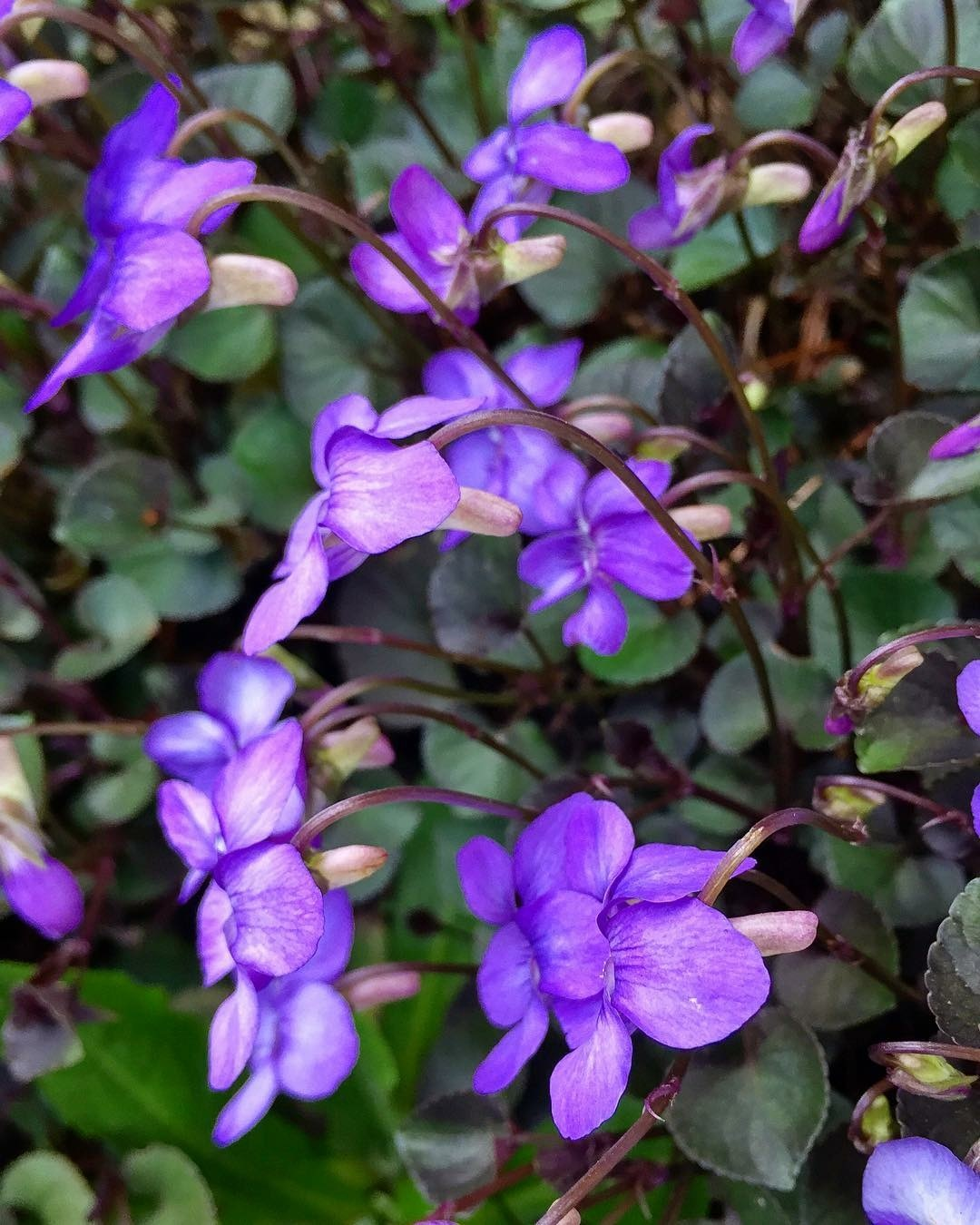 Purple Us by Ngoc-Tram Tran