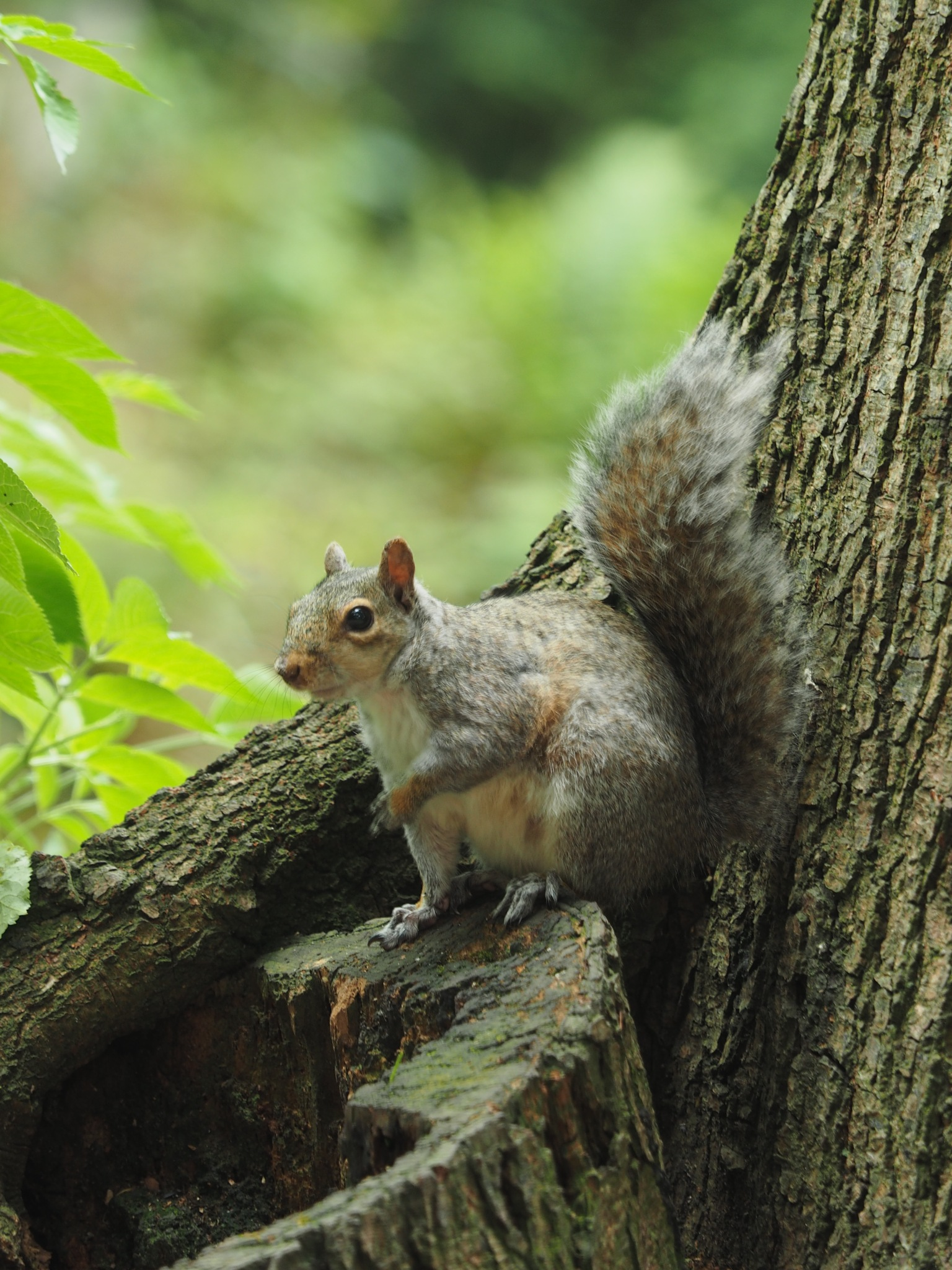Squirrel by Richard Armstrong