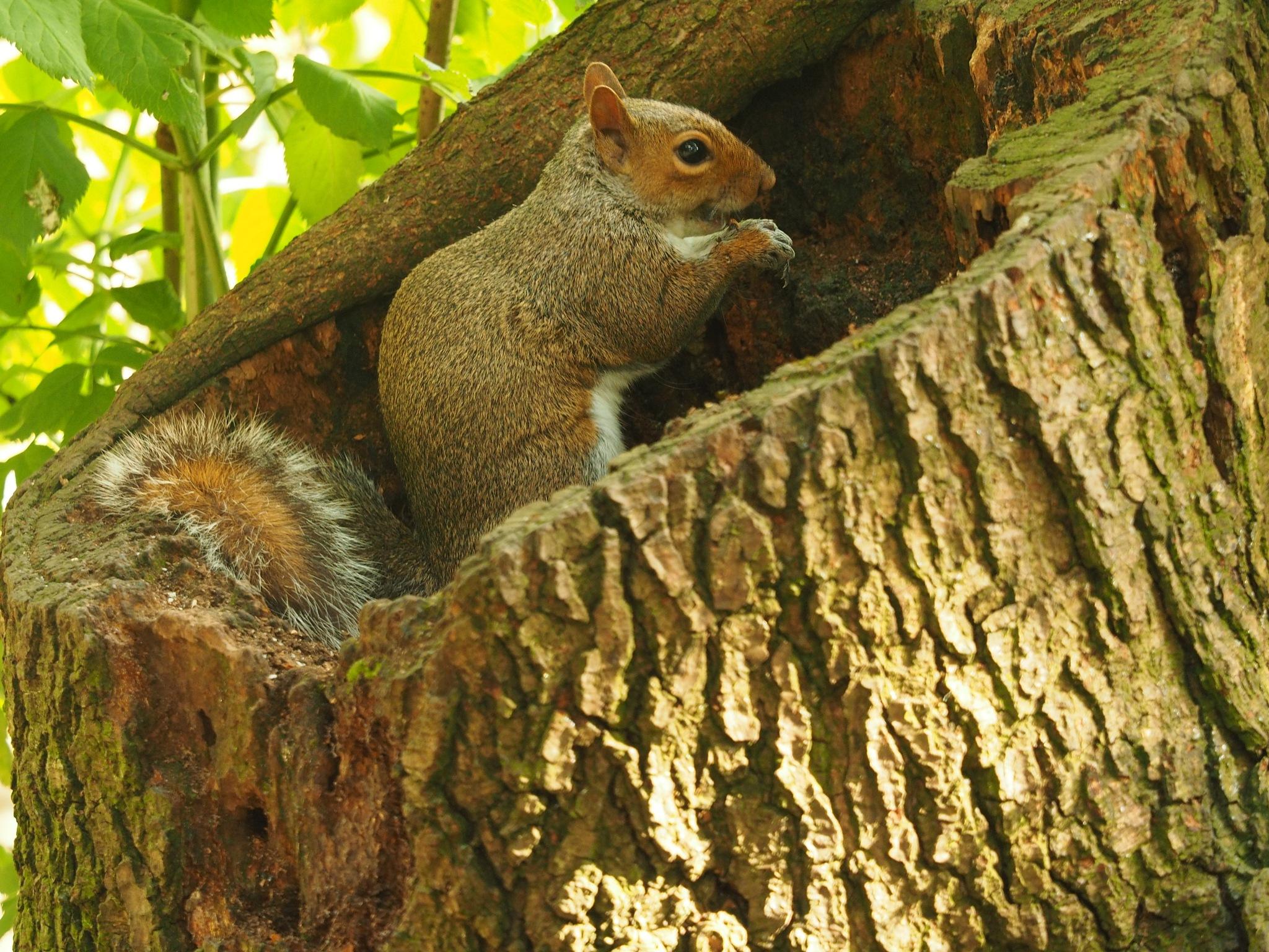 Squirrel feeding by Richard Armstrong