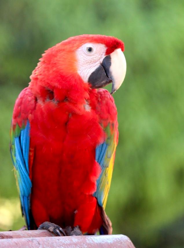 Wild Macaw by emelysaavedra