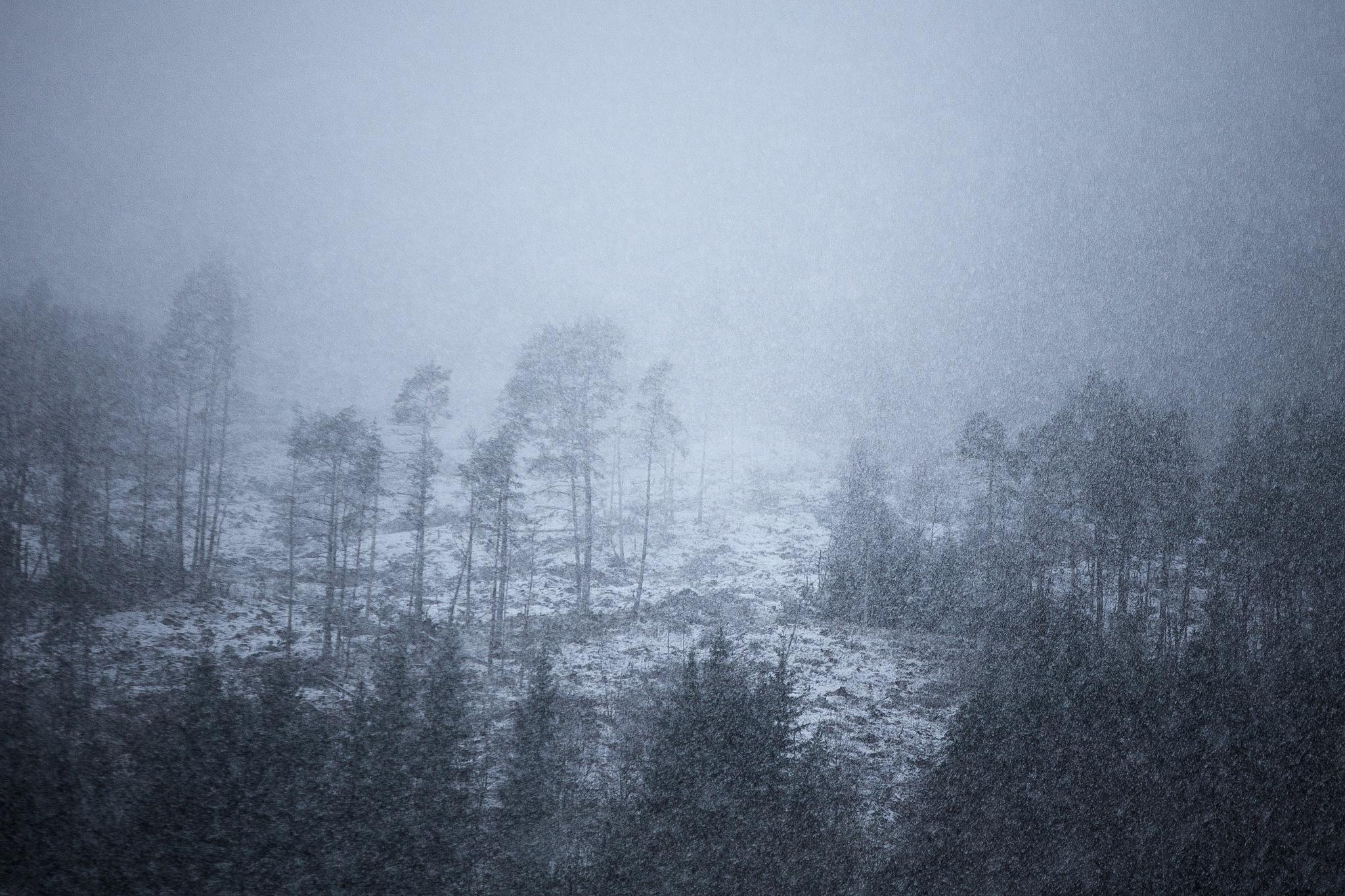 Winter forest by Vegar Samestad Hansen