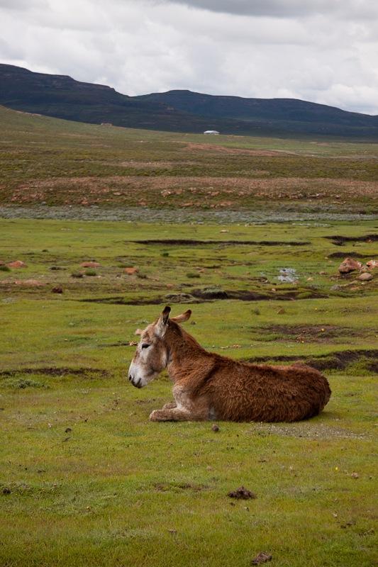 Lesotho Steed by Rampix