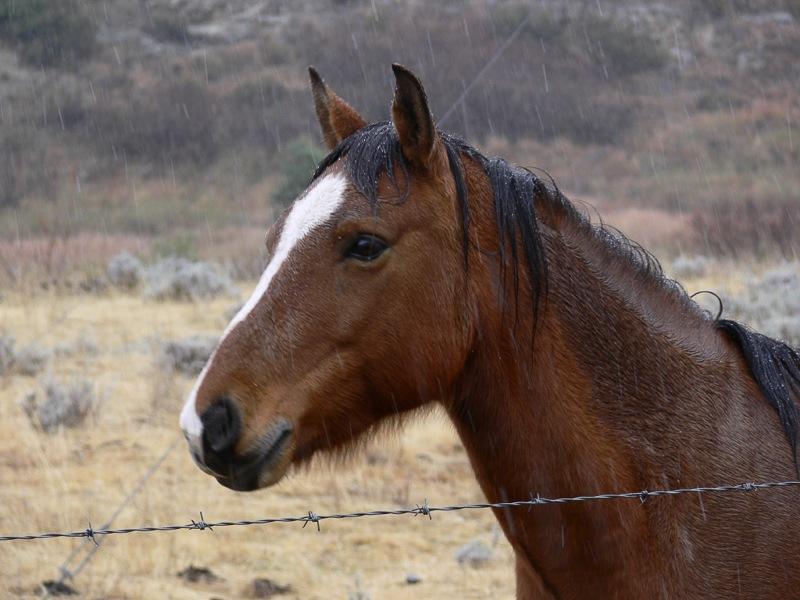 Horse by Rampix