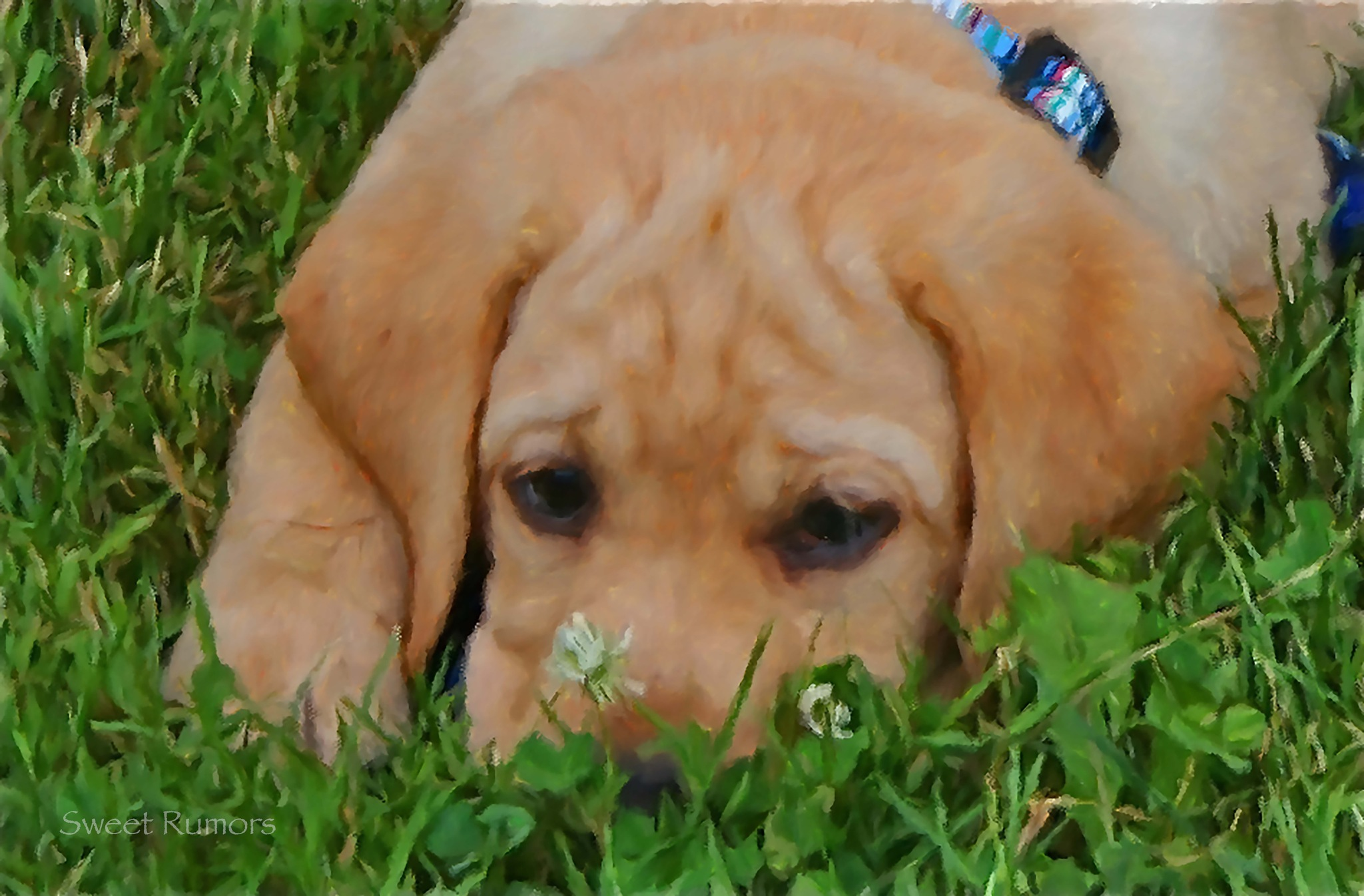 Puppy contemplating clover by Sweet Rumors