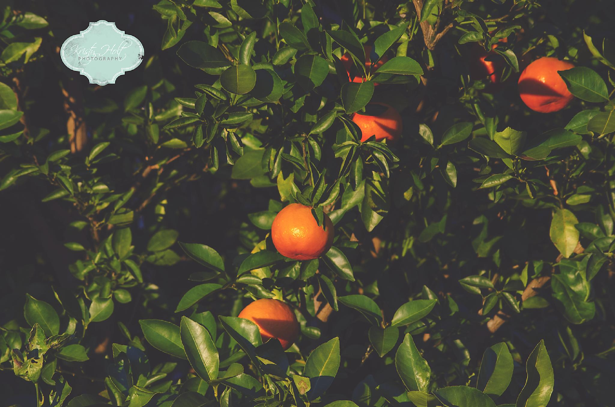Vitamin C on the tree by Kristy Holt