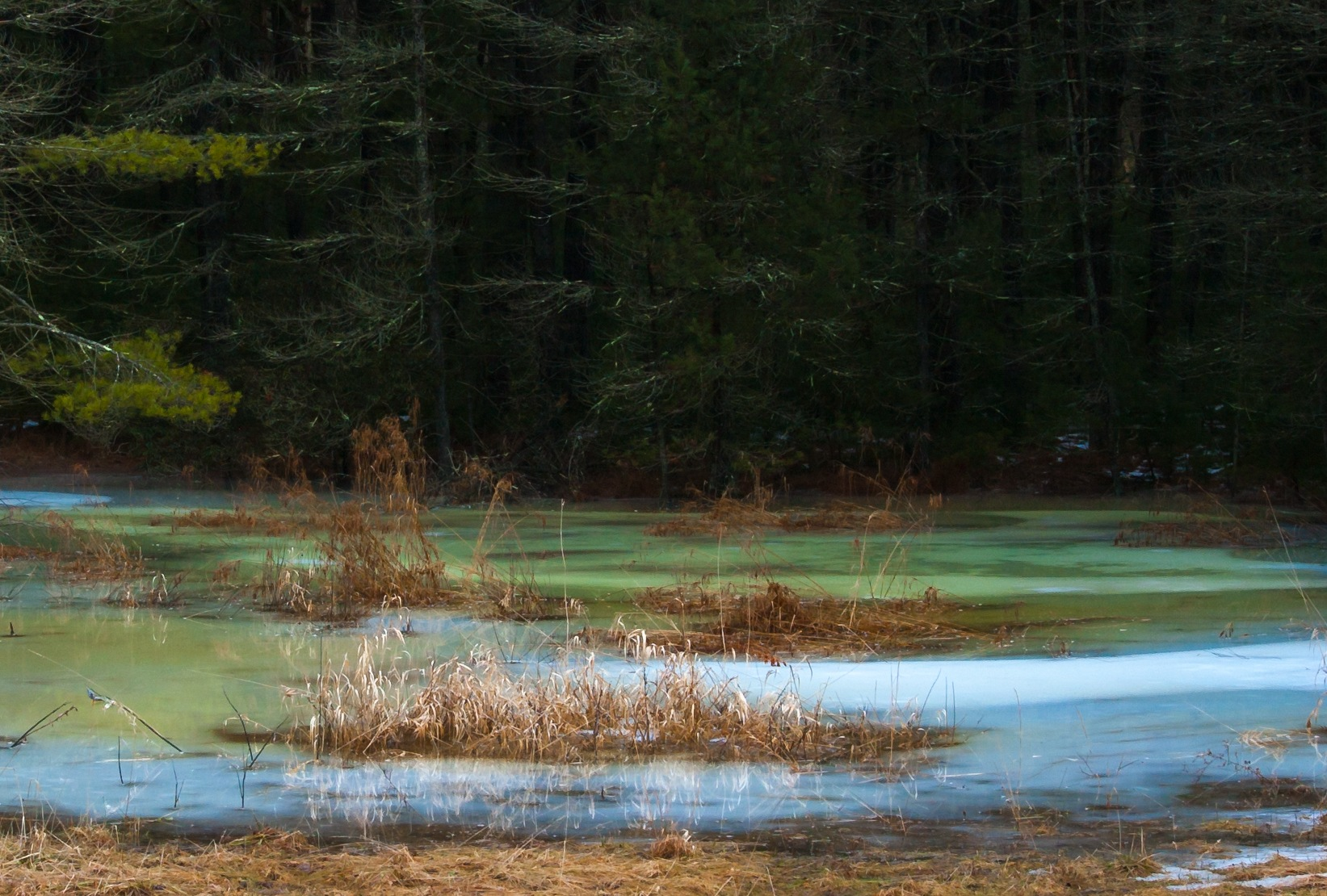 Blue and Green Ice Swamp #5 (D1H) by Stephen Sepan