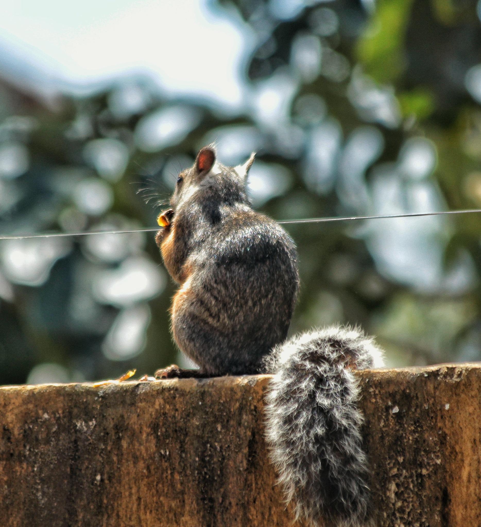 #squirrel by Jorge Monge