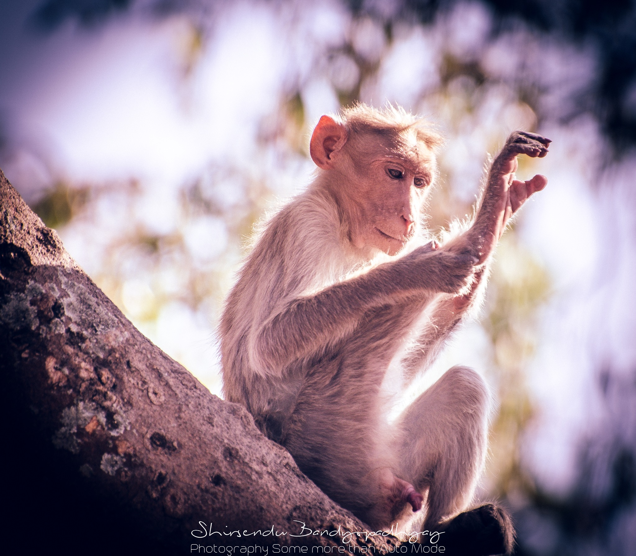 Yoga time ! by Shirsendu Bandyopadhyay