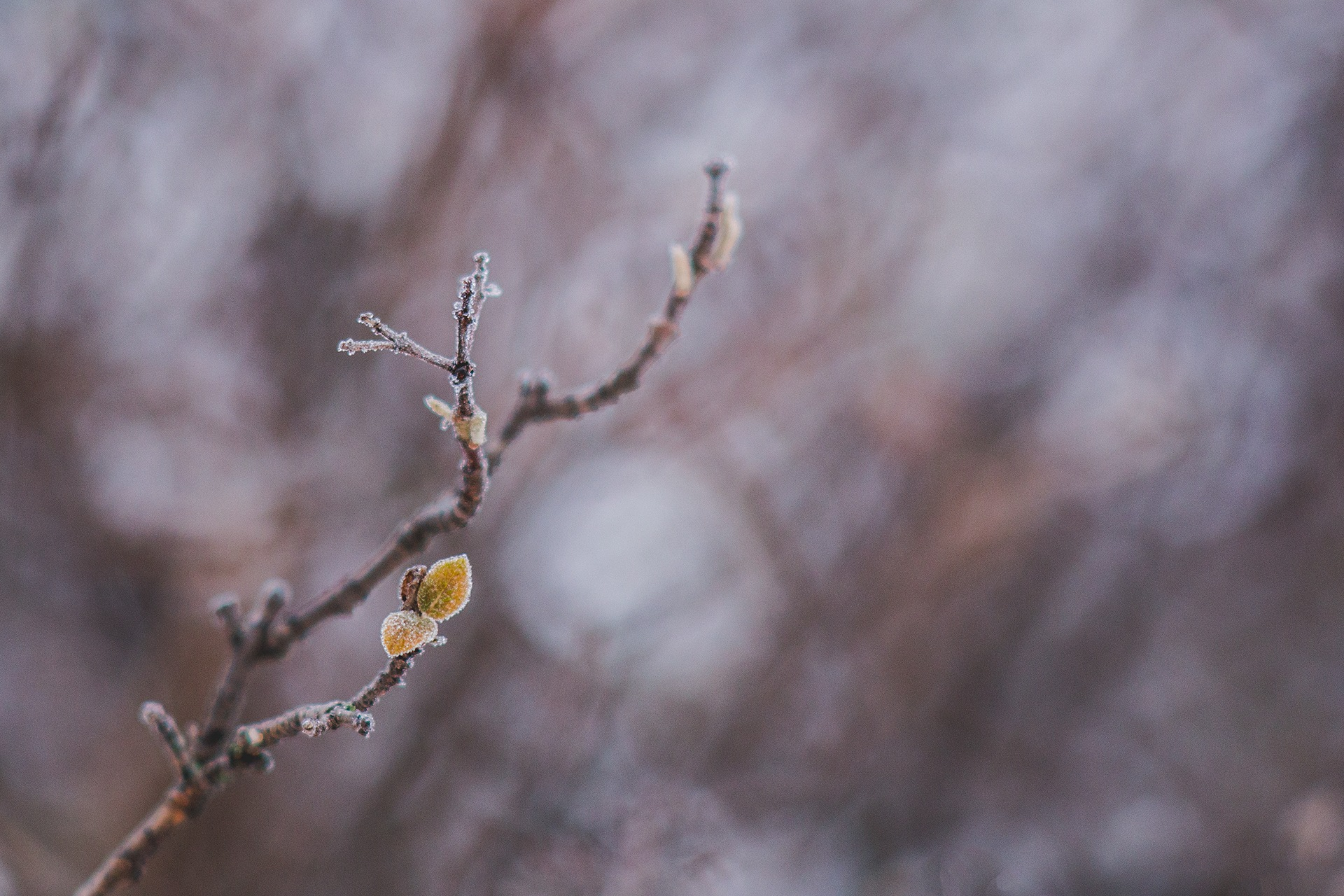 Frozen nature by Tom Photo