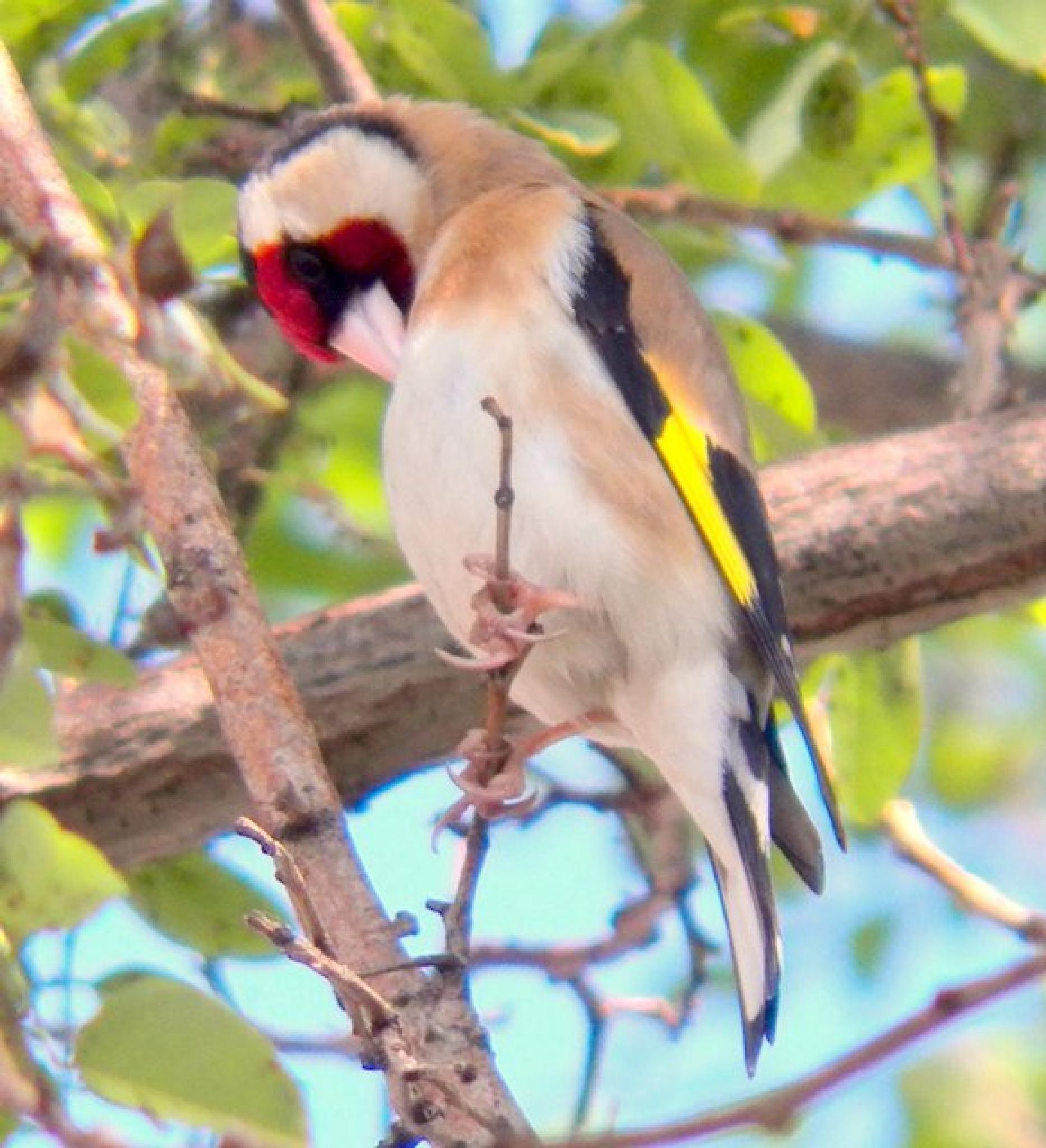 Photo in Nature #red #headed #birds #sake