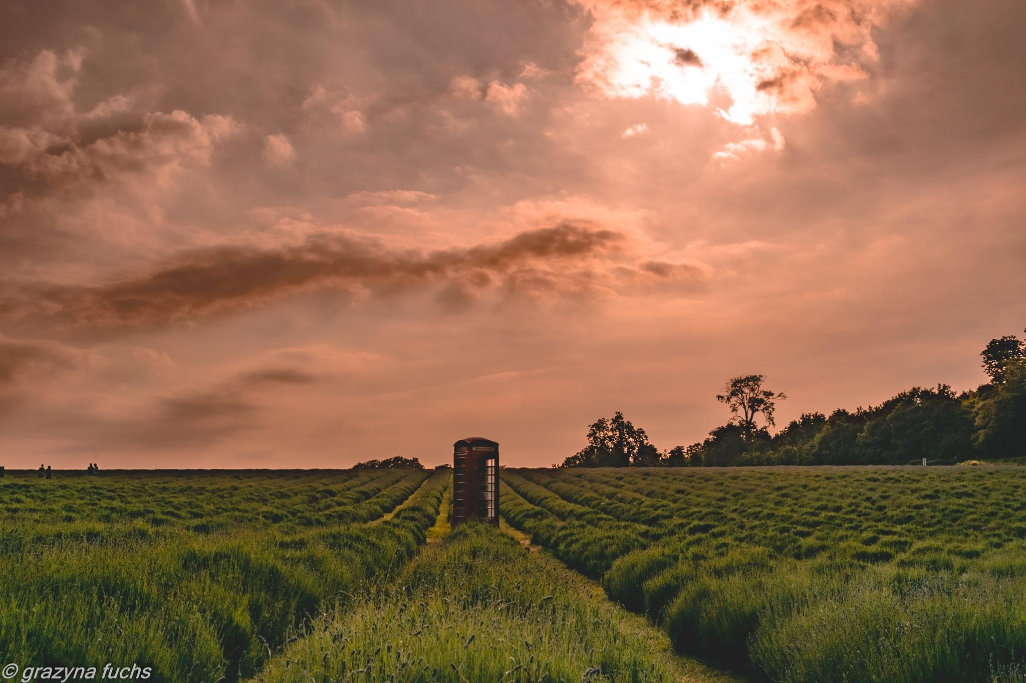 lavender field by Grażyna Fuchs