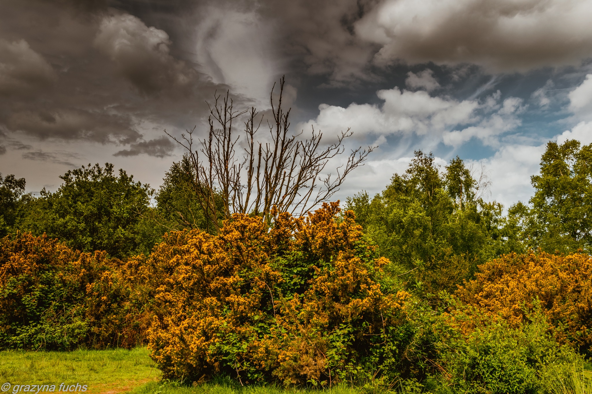 Headley Heath was acquired by the National Trust in 1946 from the Lord of the Manor, it being common by Grażyna Fuchs
