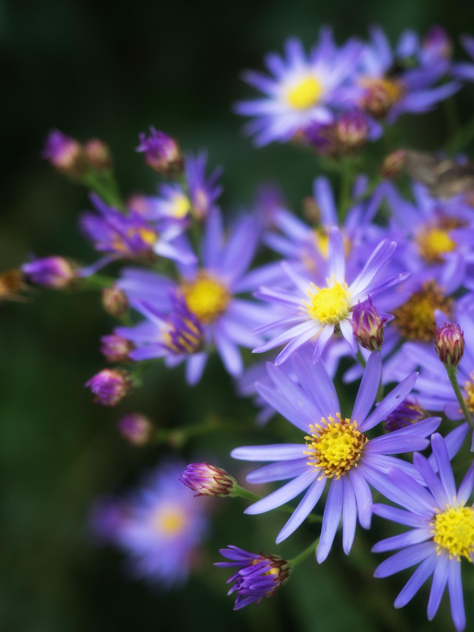 Some Purple by Sebastian Von Szuts