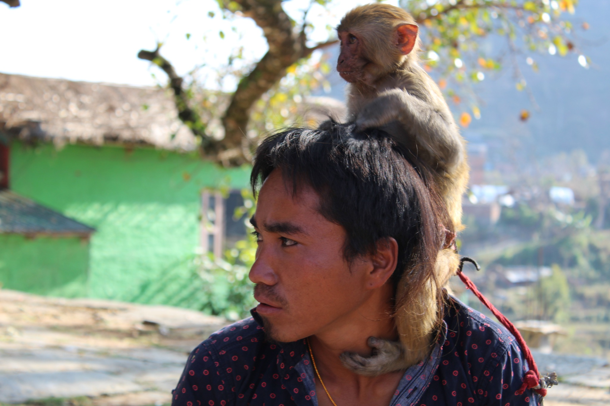 Monkey Pet by Anup Hada