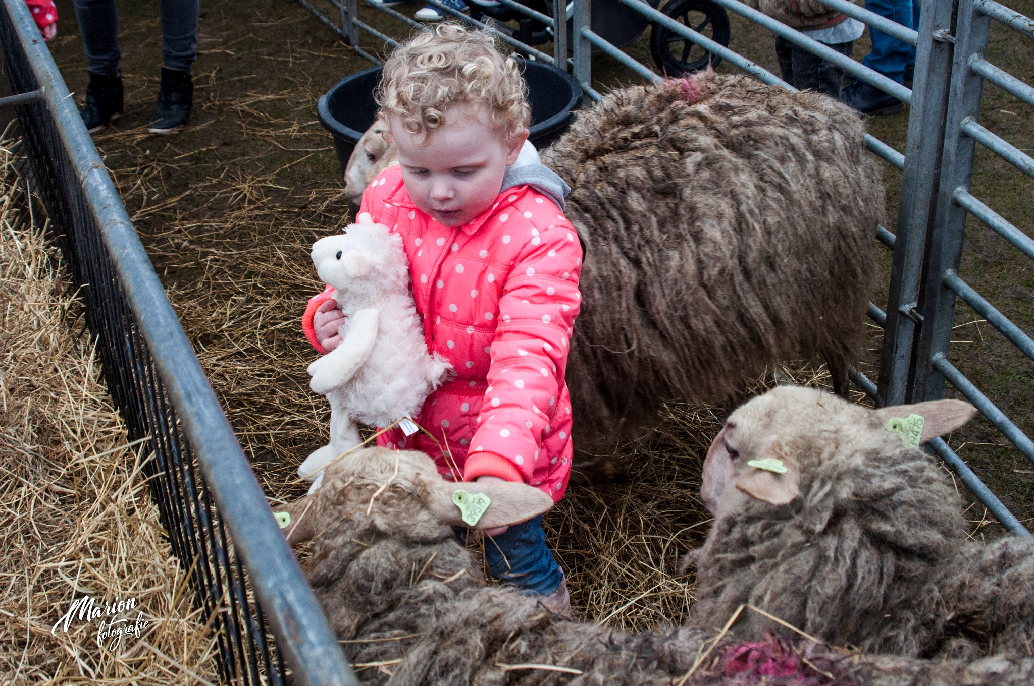 Cuddling and petting the sheep by Marion Verhaaf